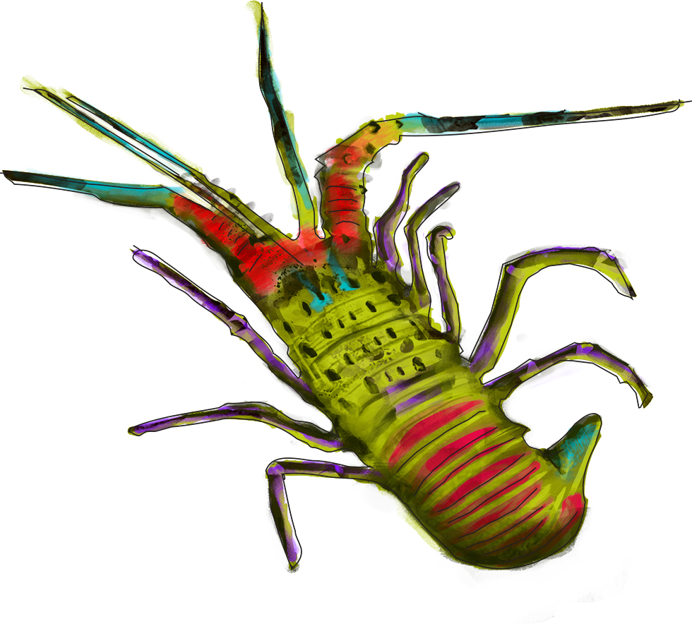Spiny Hawaiian Lobster.jpg