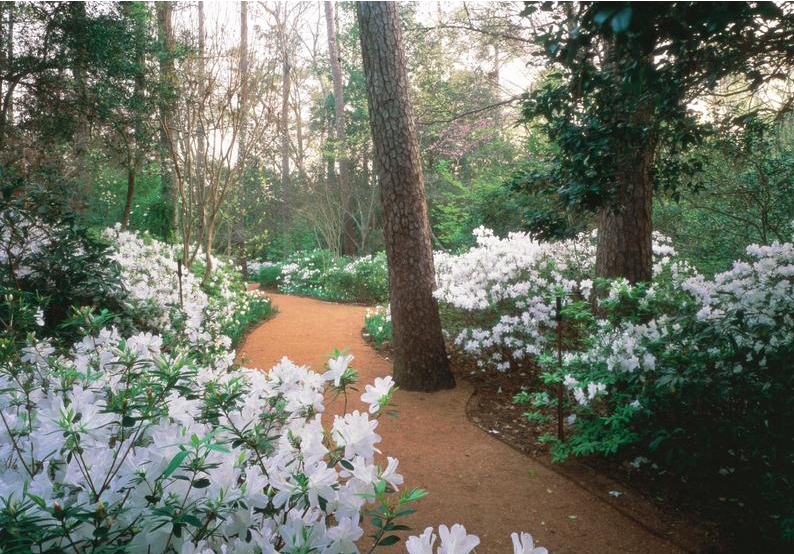 White Garden at Bayou Bend                                                                                 Photo: mfah.org