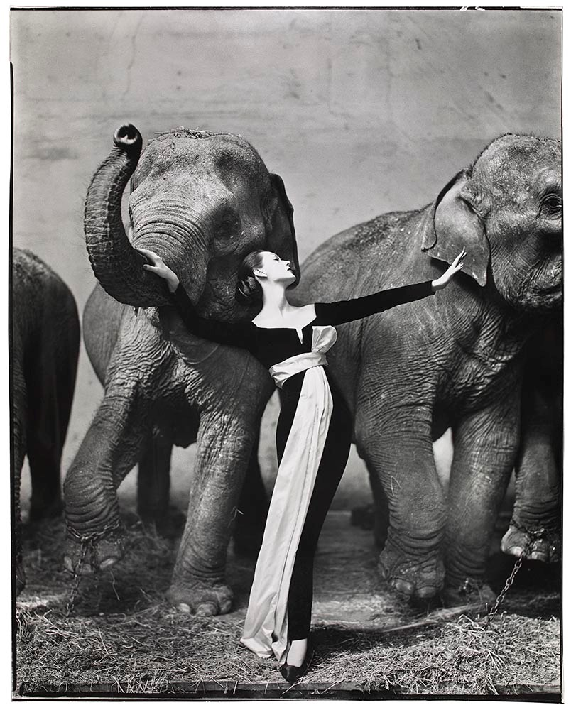 Richard Avedon,  Dovima with Elephants, evening dress by Dior, Cirque d'Hiver, Paris, August 1955.© The Richard Avedon Foundation