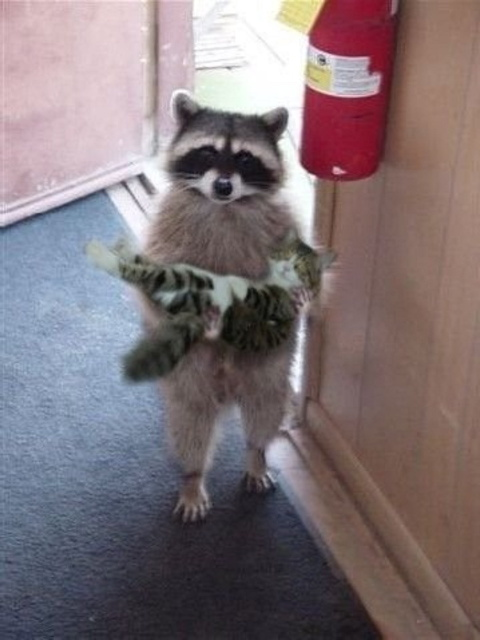 "The ""original"" photoshopped raccoon and cat."