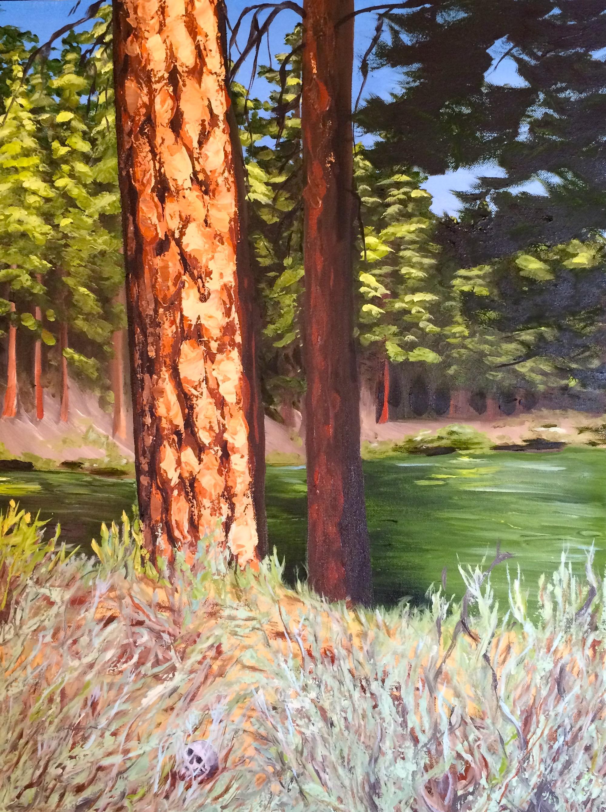 Ponderosa pine bark study. Oil on canvas (brush and pallet knife application). 18 x 24. 2014.