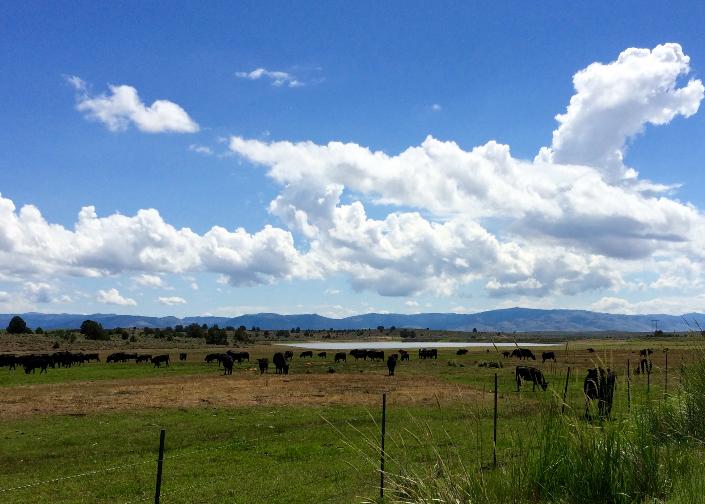 Here's a shot of the ranch from the RV park (behind me). Those black things are future hamburgers.