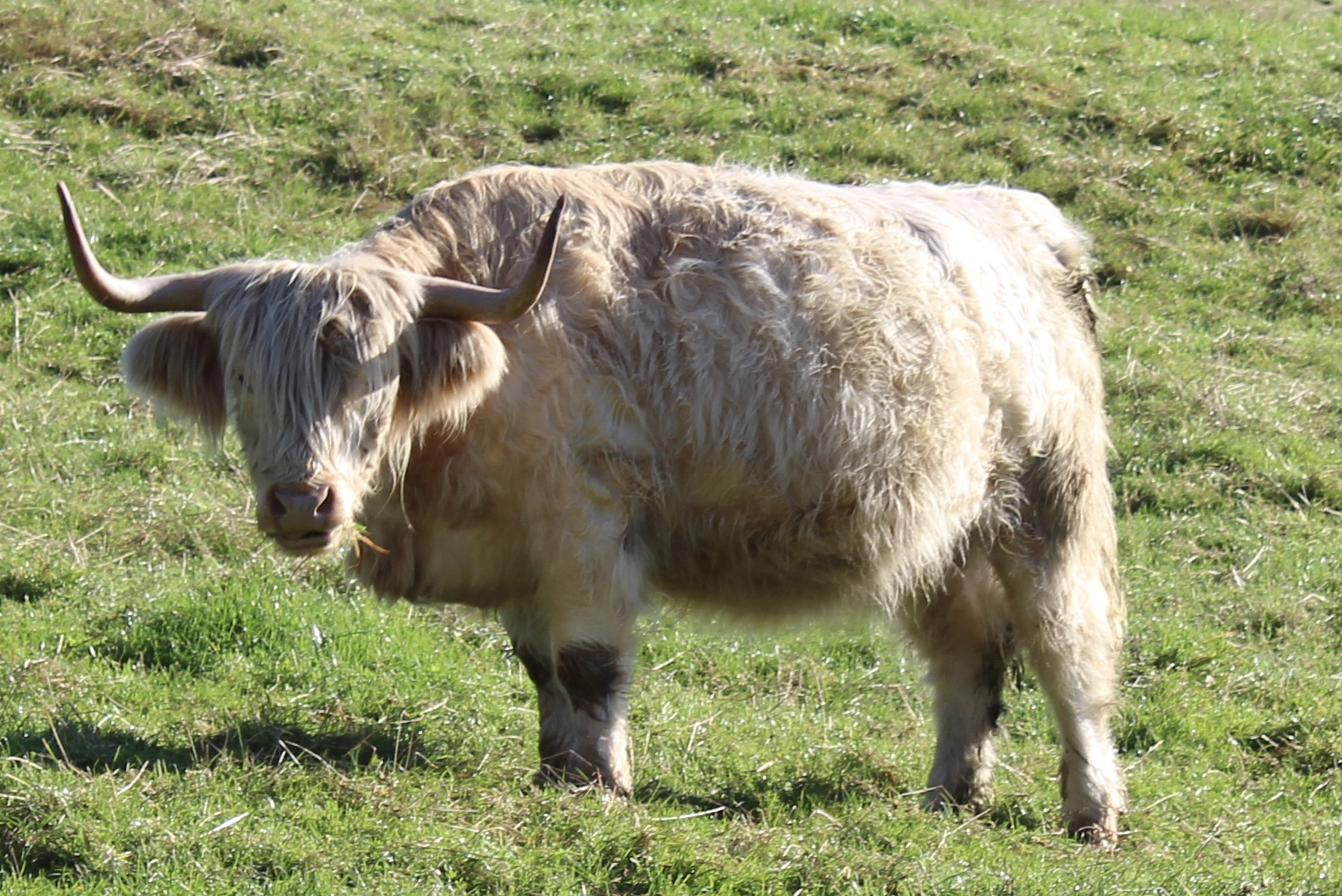 Fluffy coo