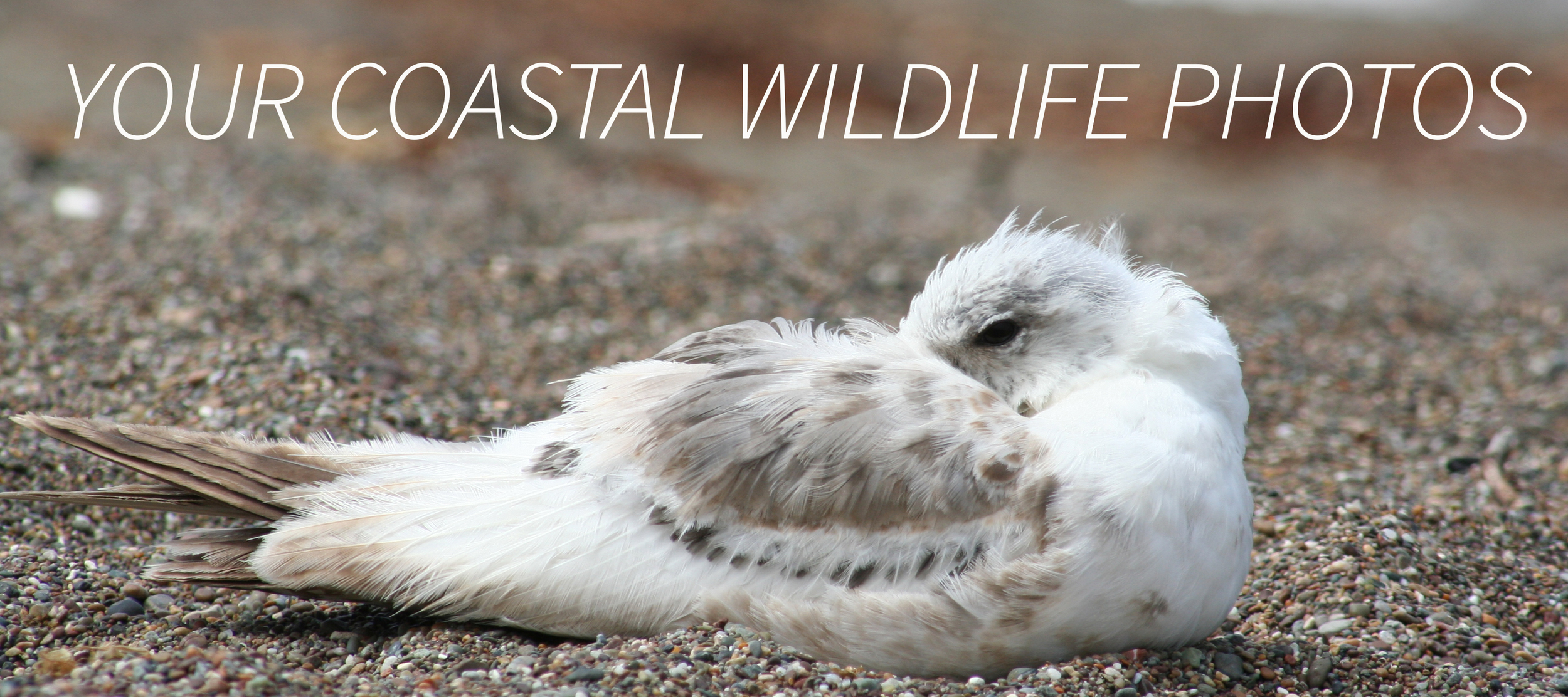 We invited  Evotis  readers to send us coastal wildlife photos. Send yours to onehealth@ucdavis.edufor consideration.