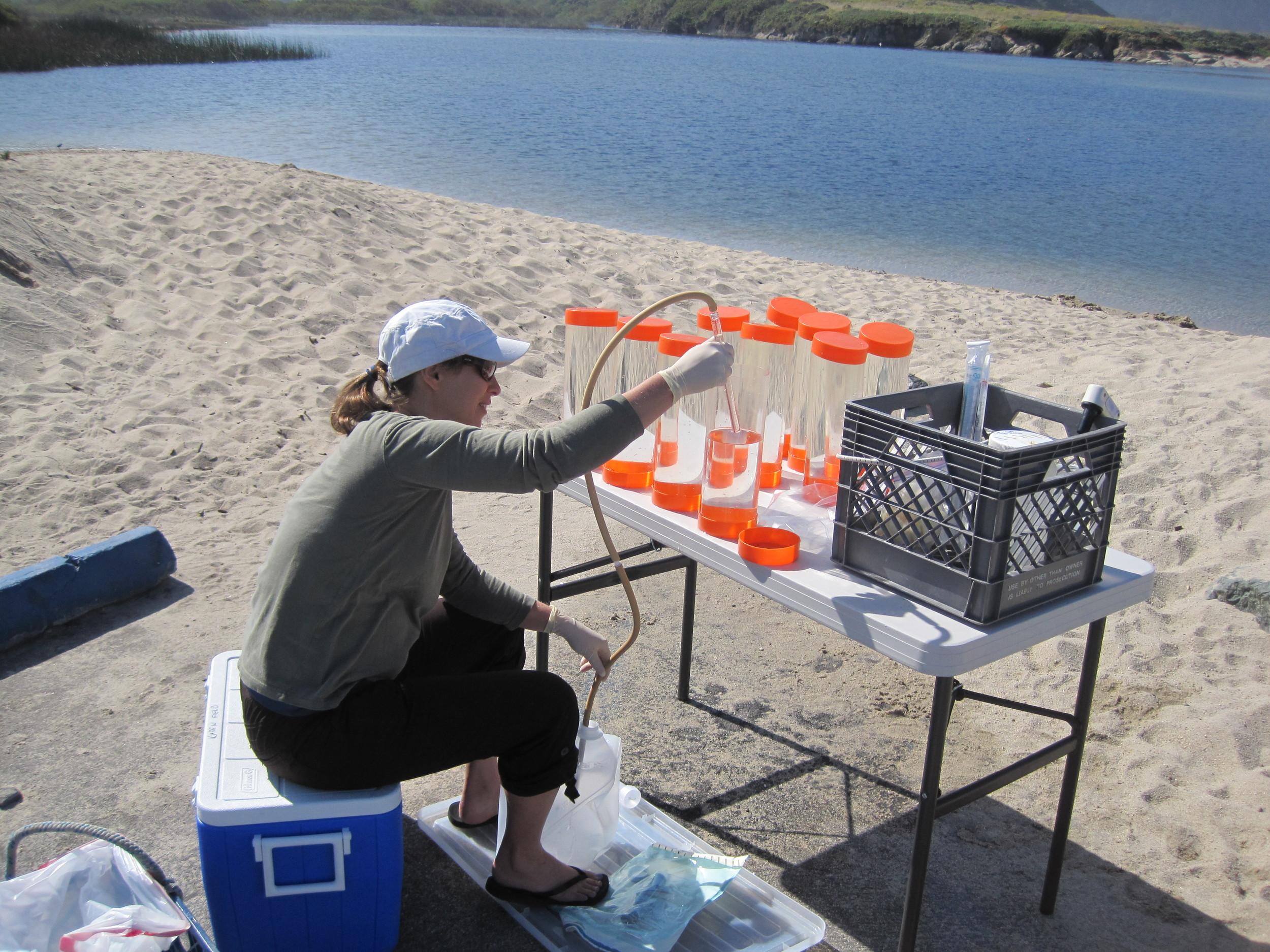 Dr. Karen Shapiro working in the Monterey Bay.