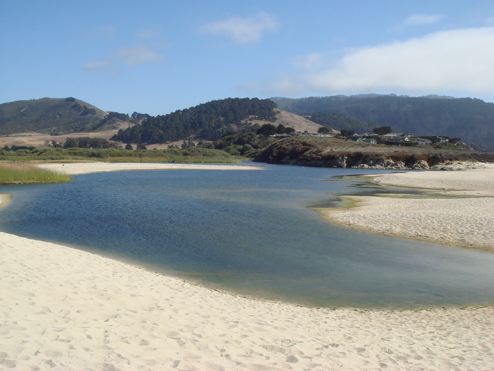 Wetlands, like this marsh in California's Carmel-by-Sea, can help filter disease-causing pathogens from humans and animals before they flow to the ocean. Photo: Karen Shapiro/UC Davis