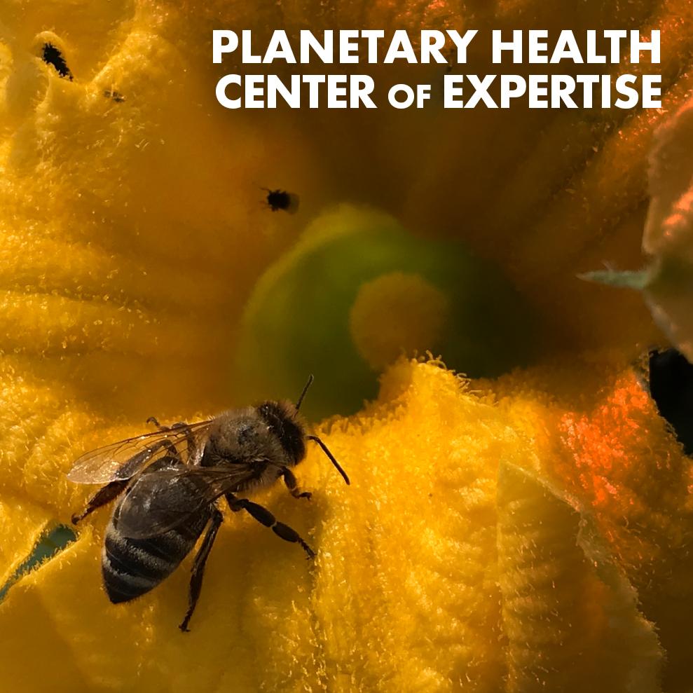 planetary-health-coe-icon.jpg