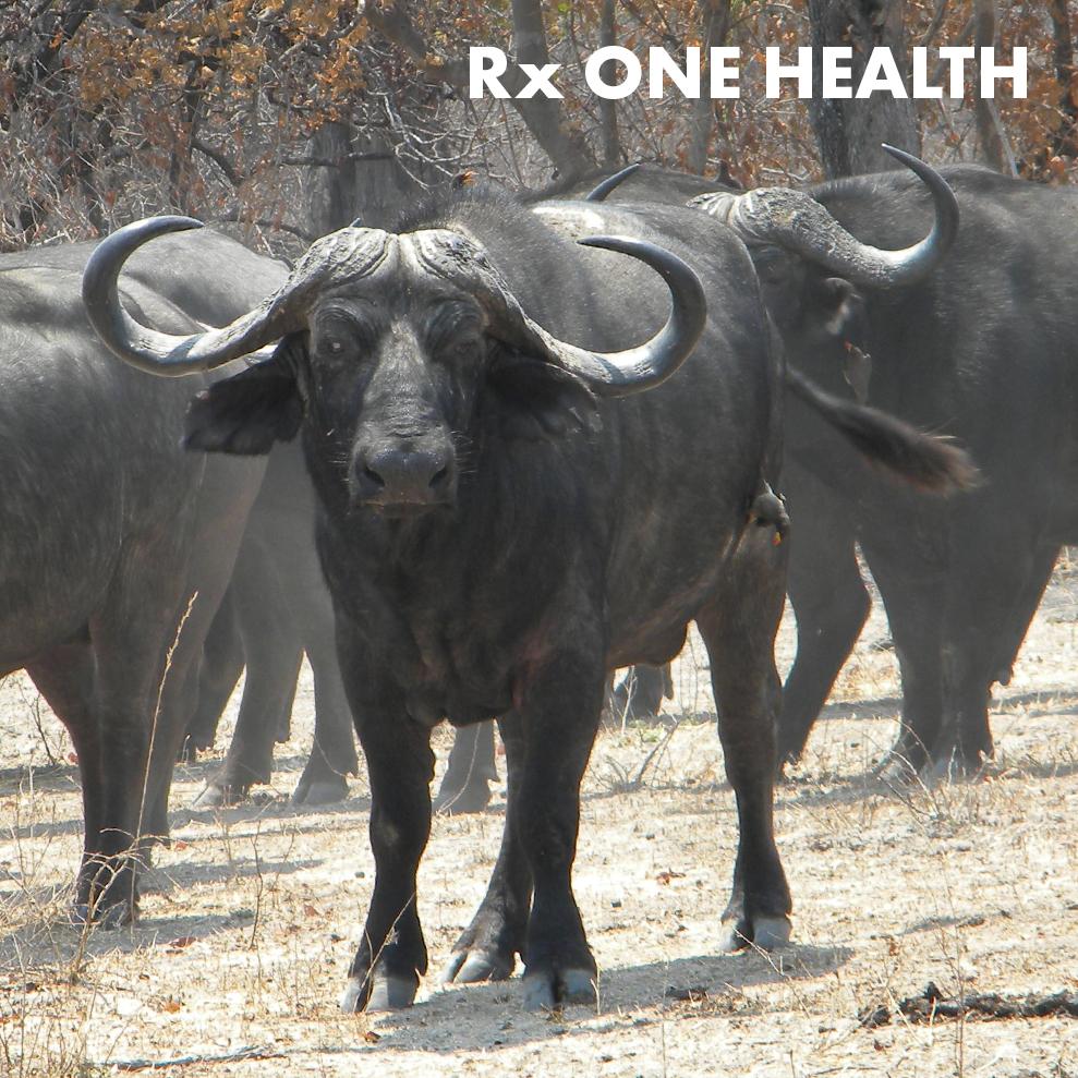 rx-one-health-icon.jpg
