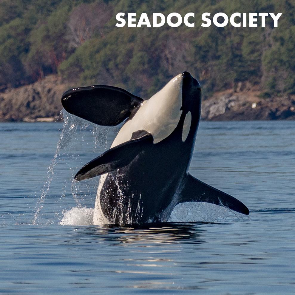 seadoc-society-icon.jpg
