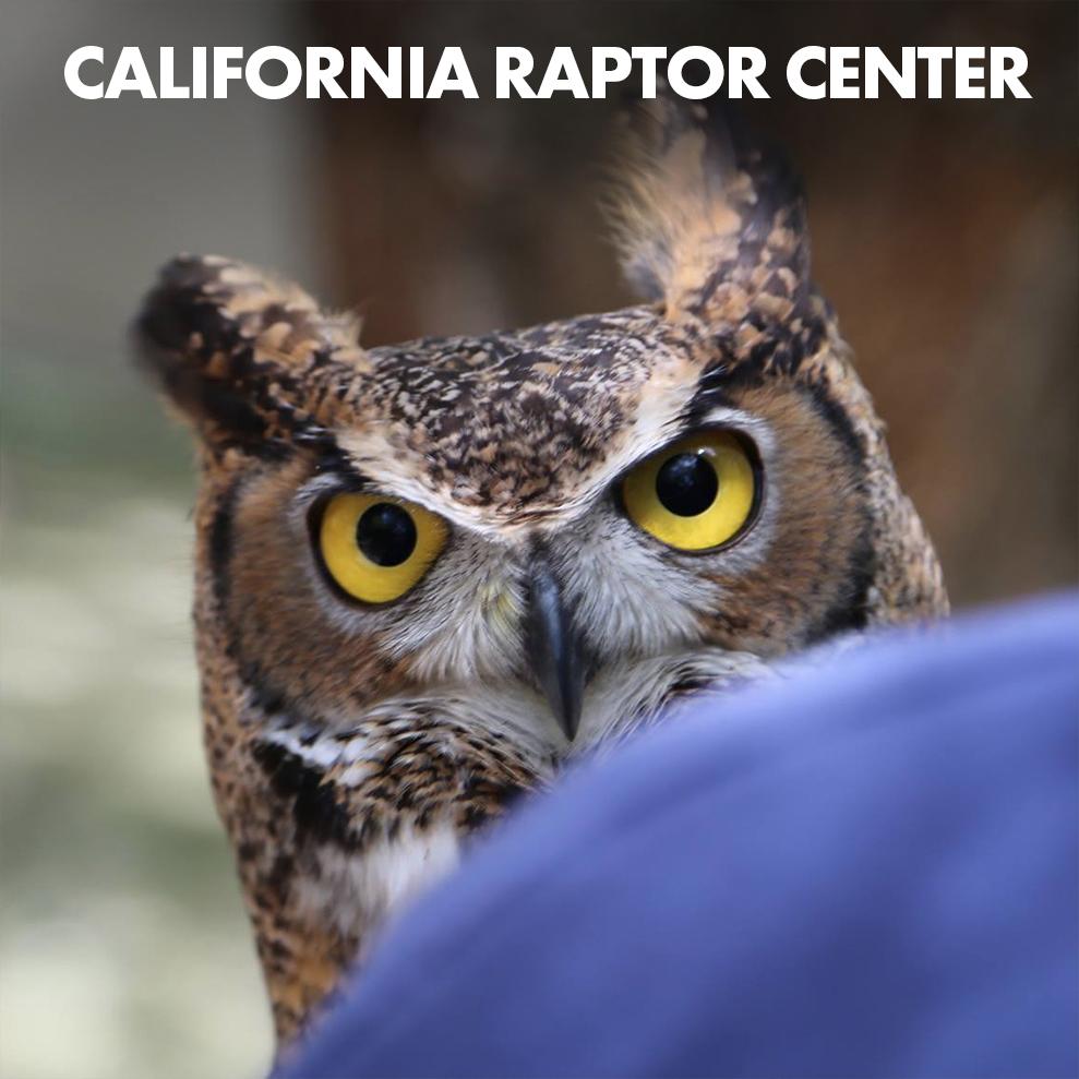 california-raptor-center-icon.jpg
