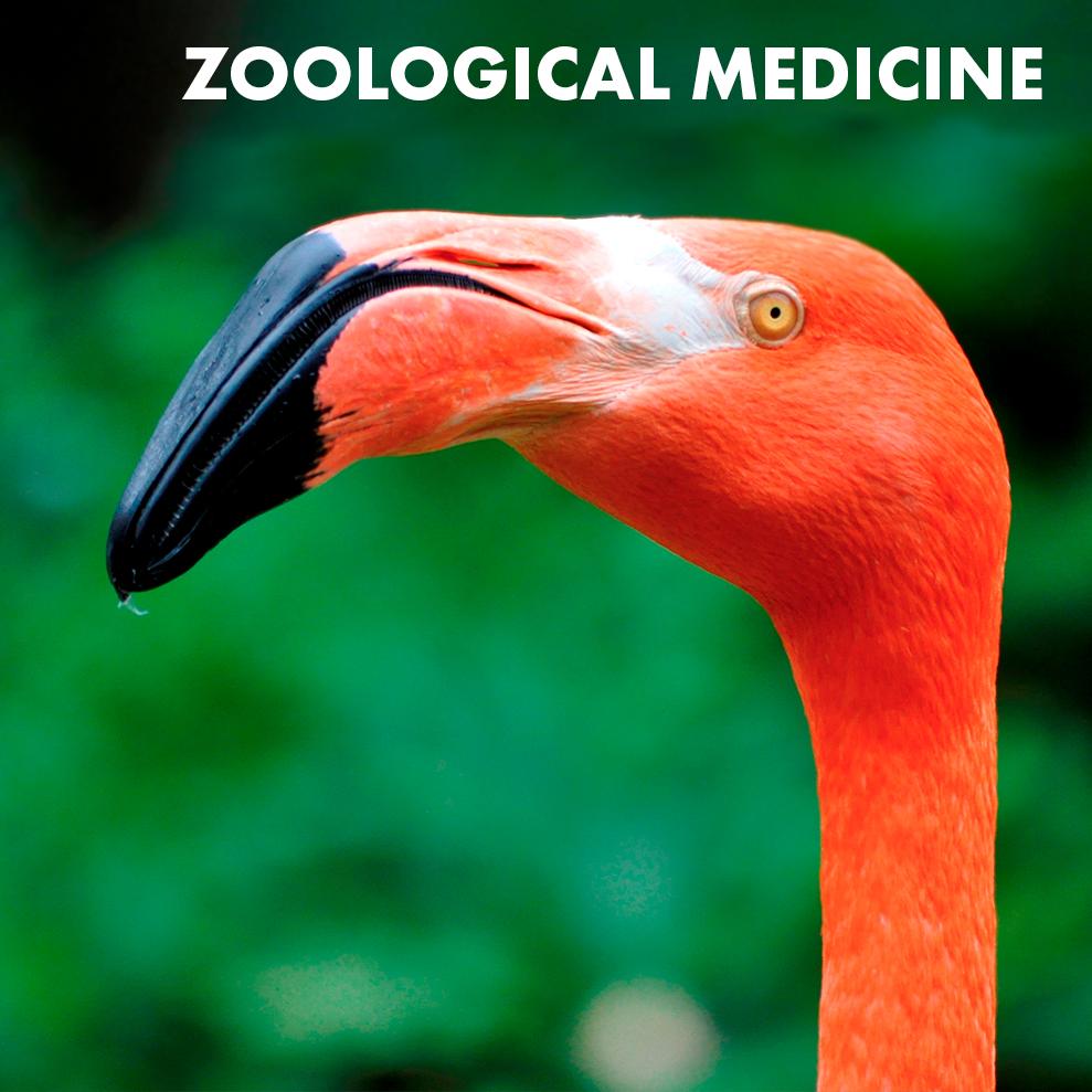 zoological-medicine-icon.jpg