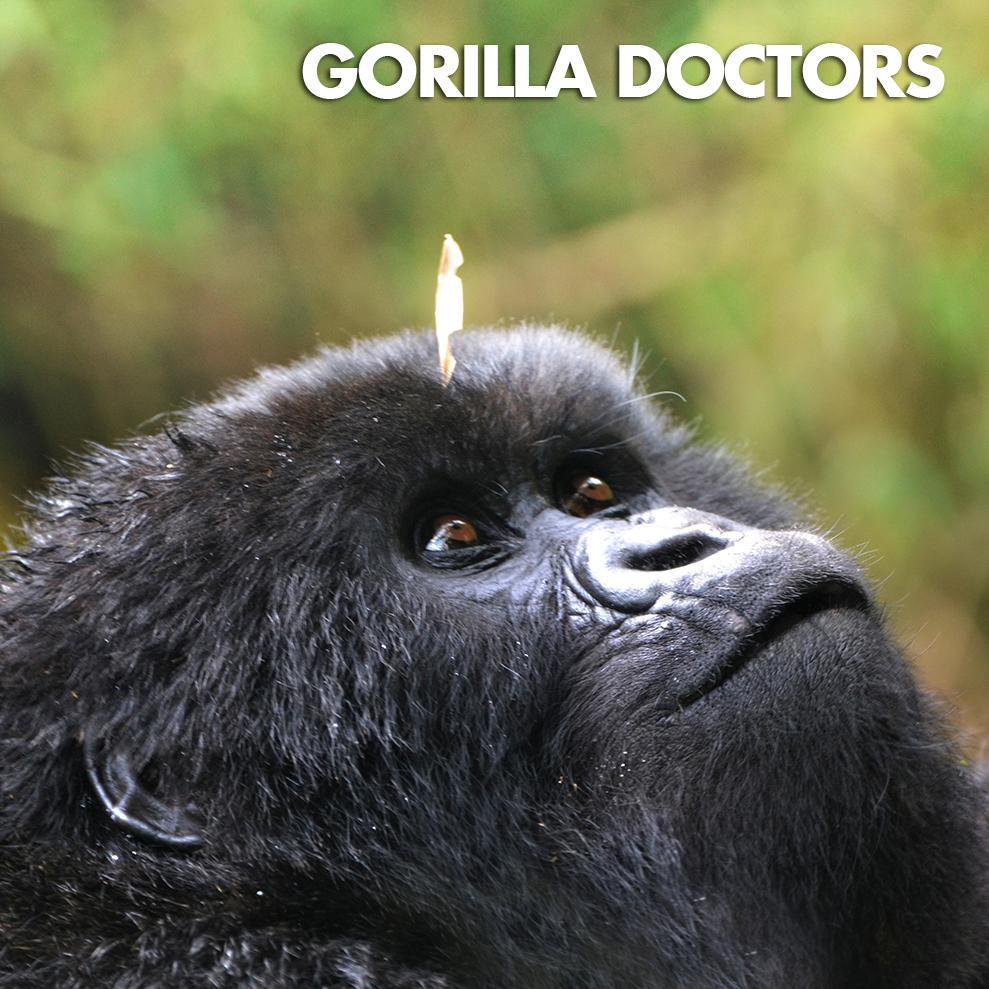 GORILLA DOCTORS-ICON.jpg