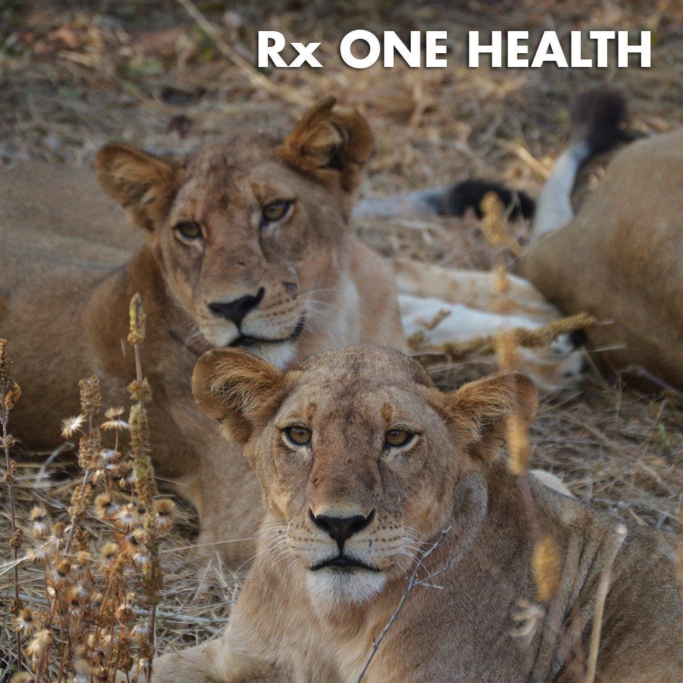 RXOH-ICON.jpg