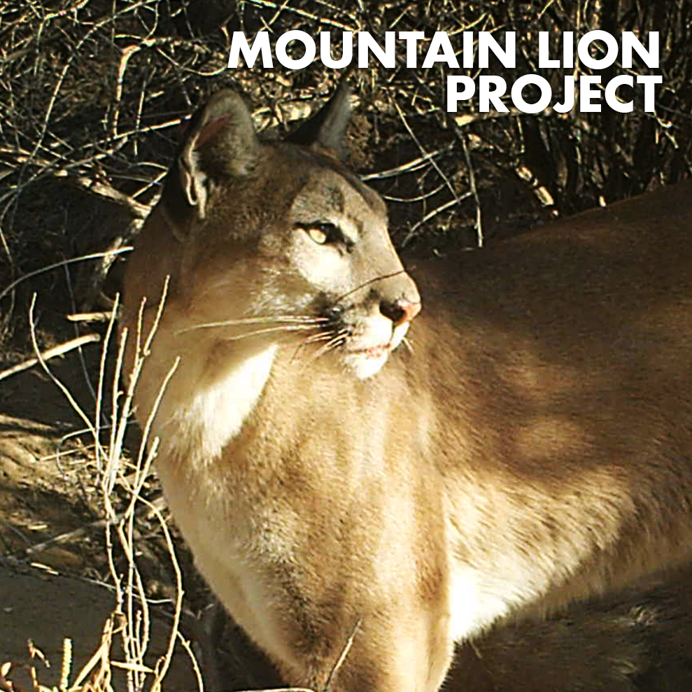 MOUNTAIN LION PROJECT-ICON.jpg