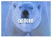 bearbook.jpg