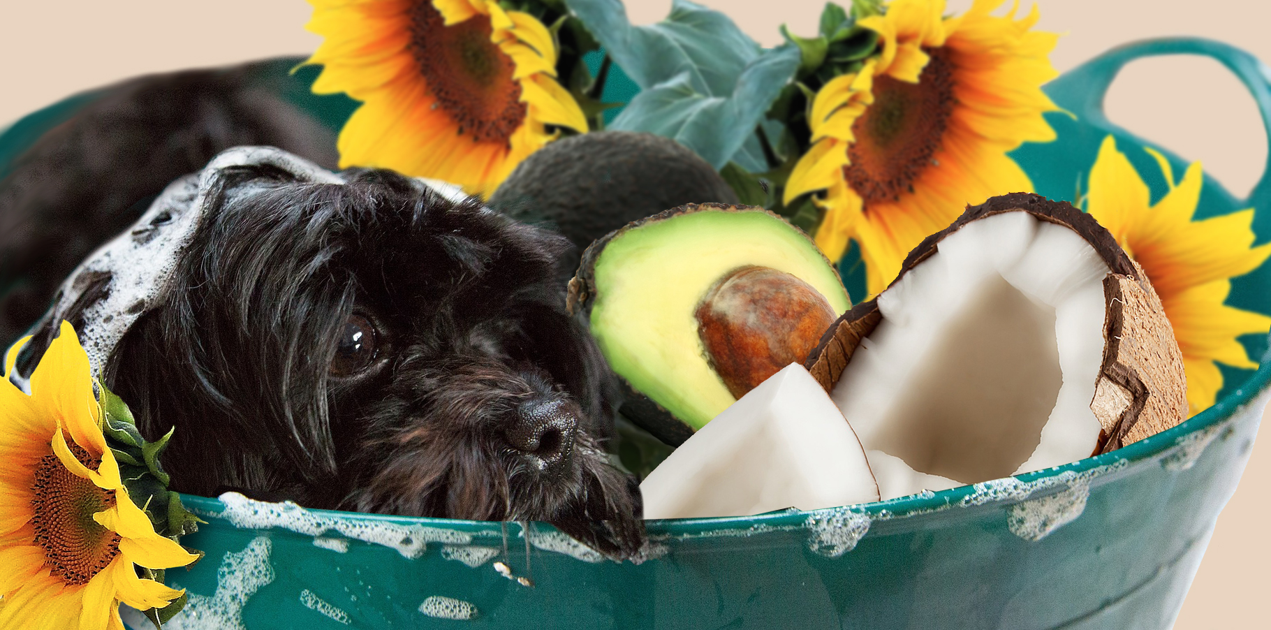 Our Pet Shampoo contains raw sunflower oil to nourish, coconut oil to clean and lather, and avocado oil to soothe. Bring your own dog.