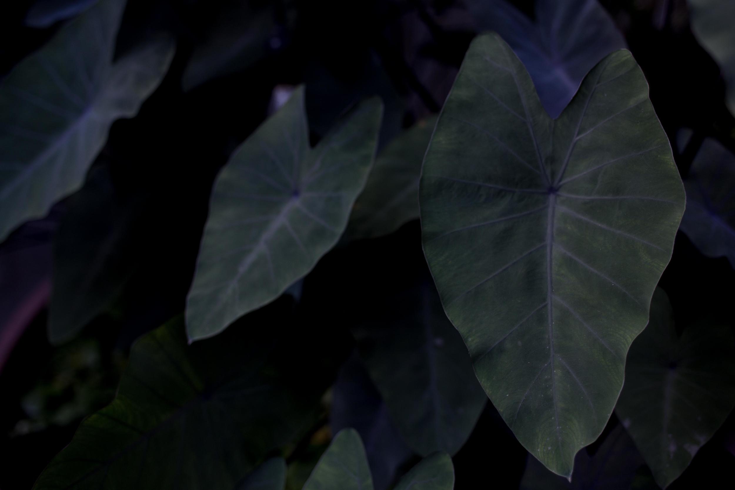 orchids_-10.jpg