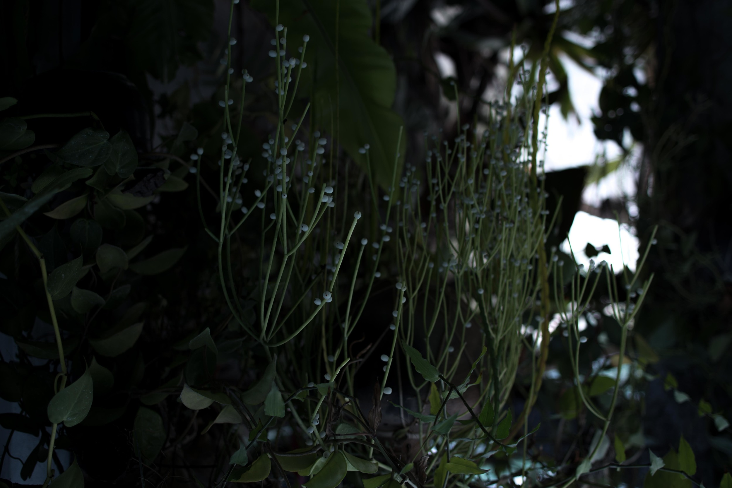 orchids_-14.jpg