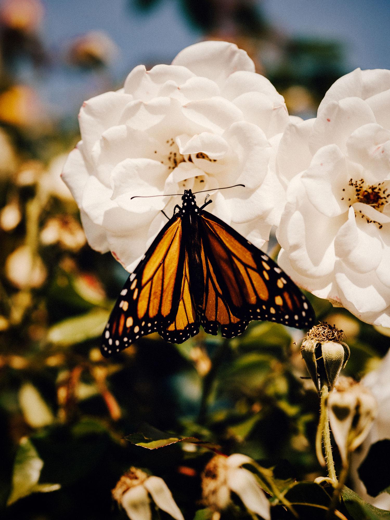 Brand_Vineyard_Butterflies_Vert_0407_RGB.jpg
