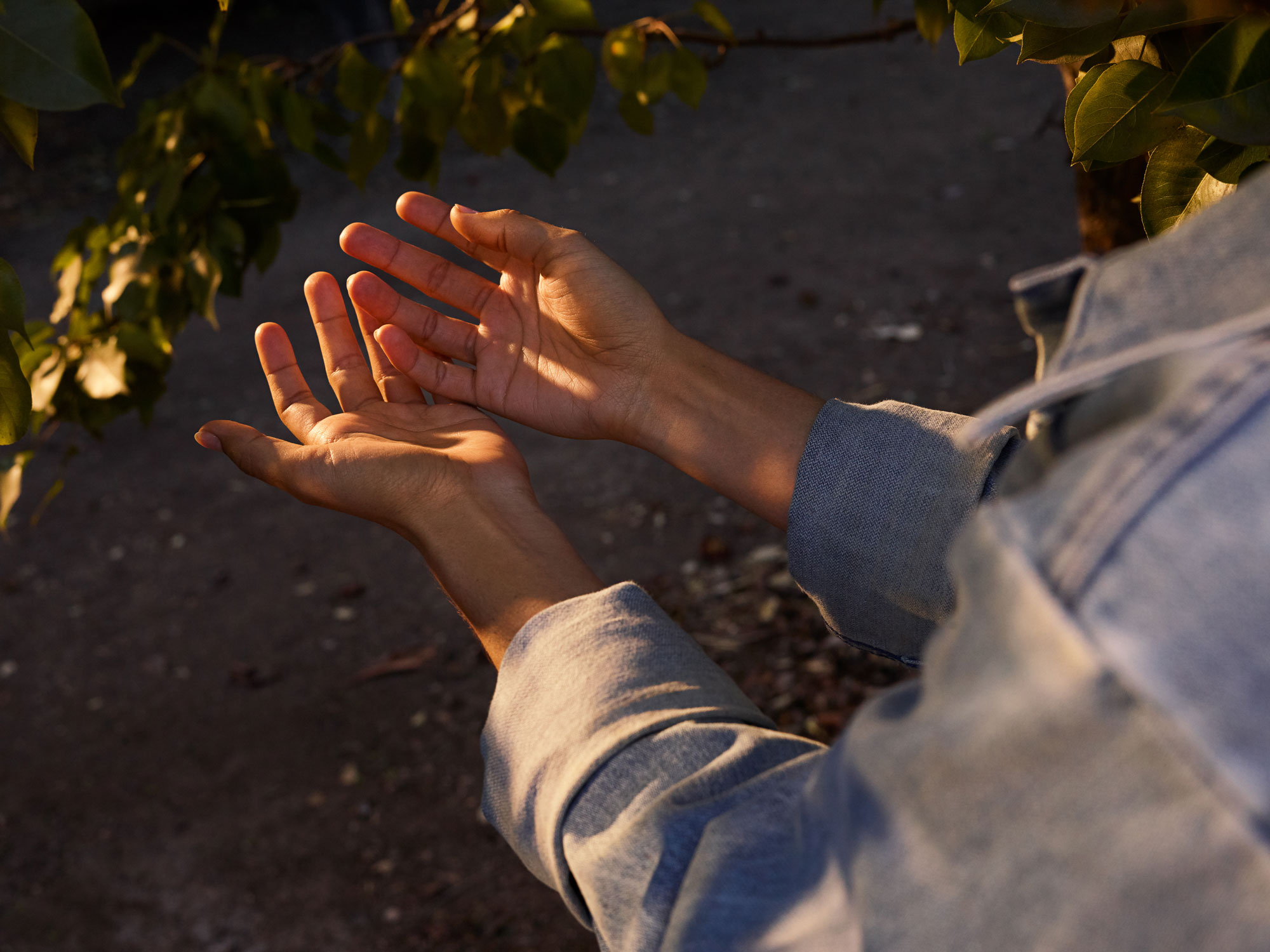 Brand_Orchard_PearTreeHands_3190_RGB_v2.jpg