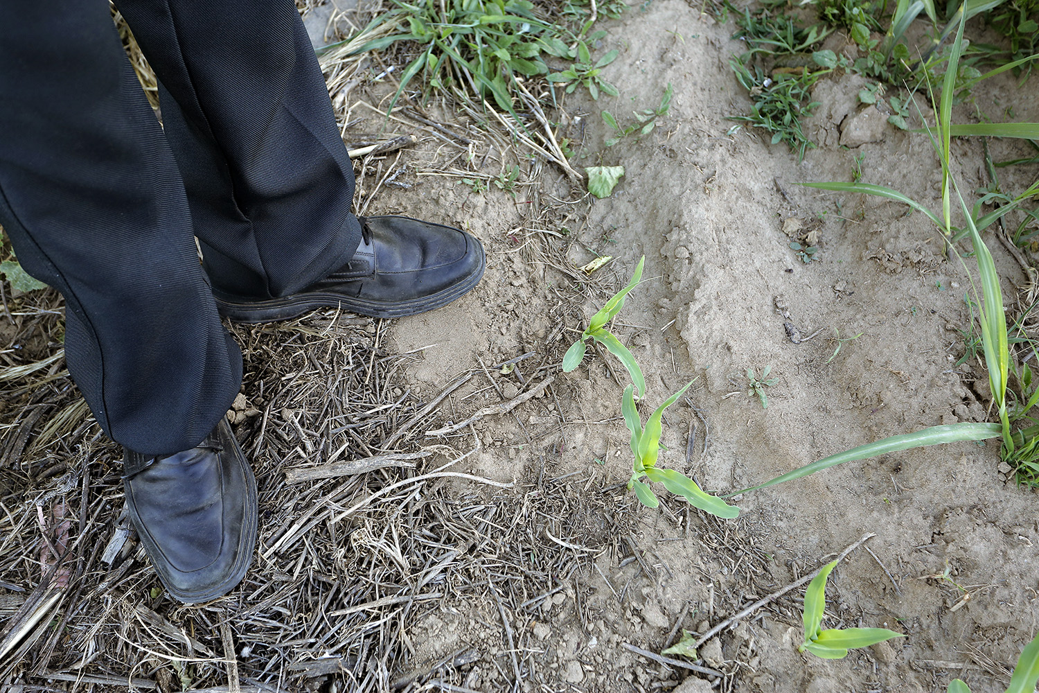 dad and his corn plants_1500.jpg