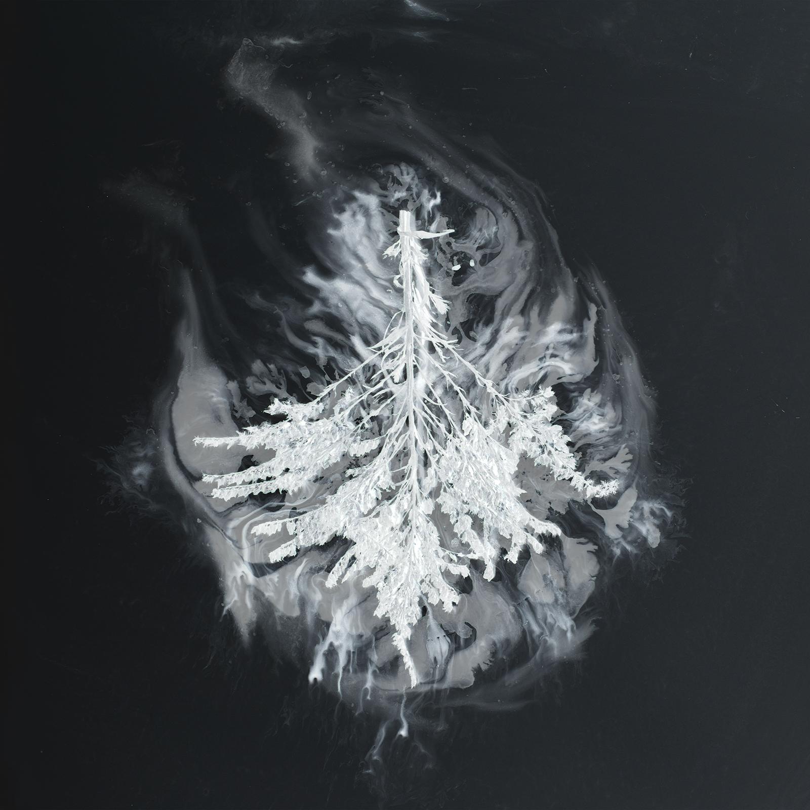 Seabuckthorn - Turns - Cover Art.jpg