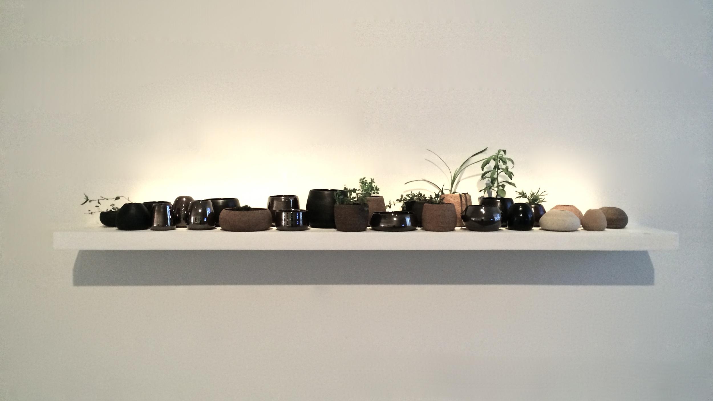 Sweet Nature. 2015. Australian clay, glaze, local plants.