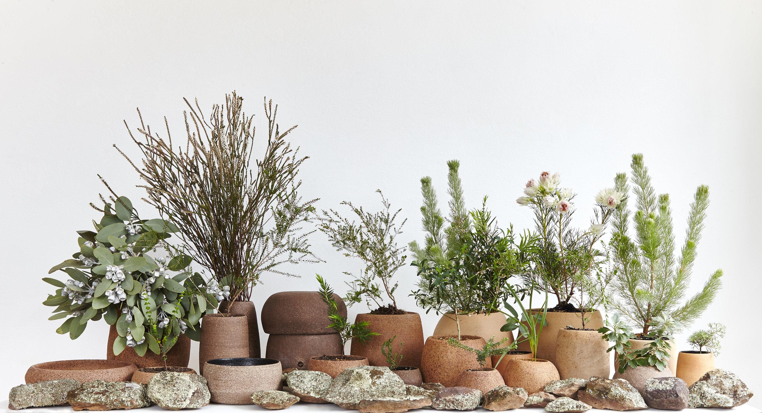 Sweet Nature. 2016. Australian clay. Local plants.