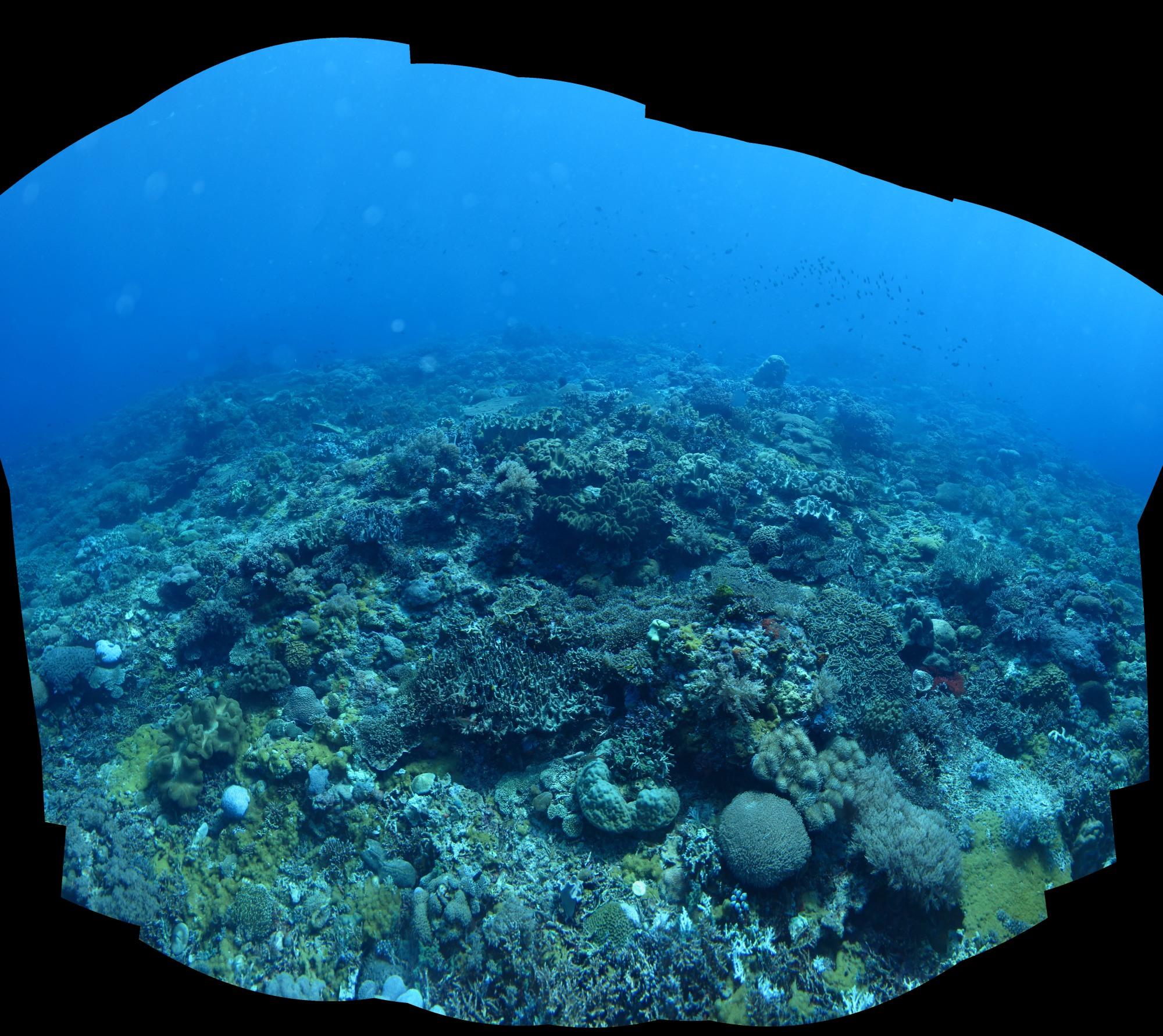 Stiched panorama using  PTGui