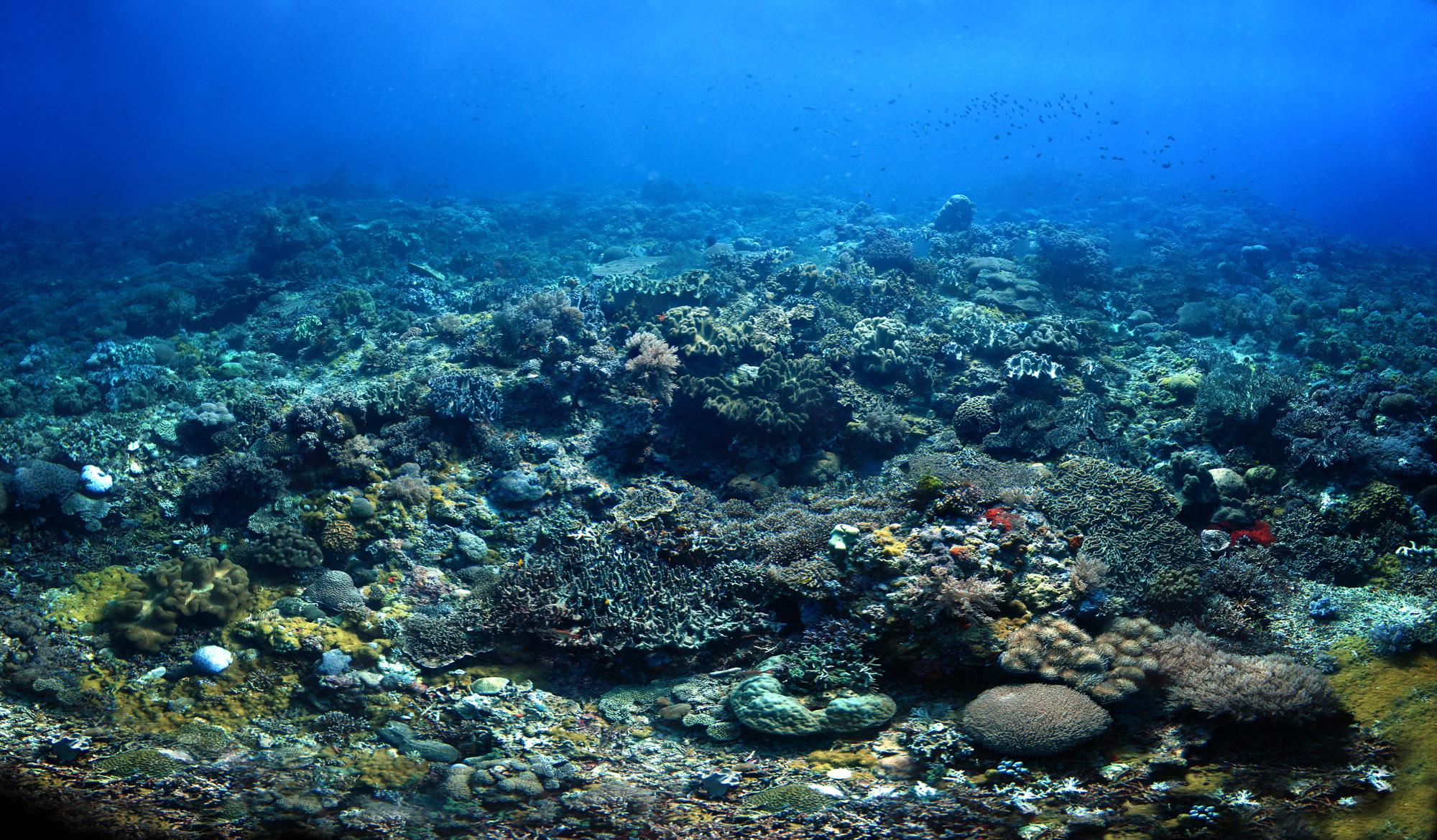 unterwater_2_v4_small.jpg