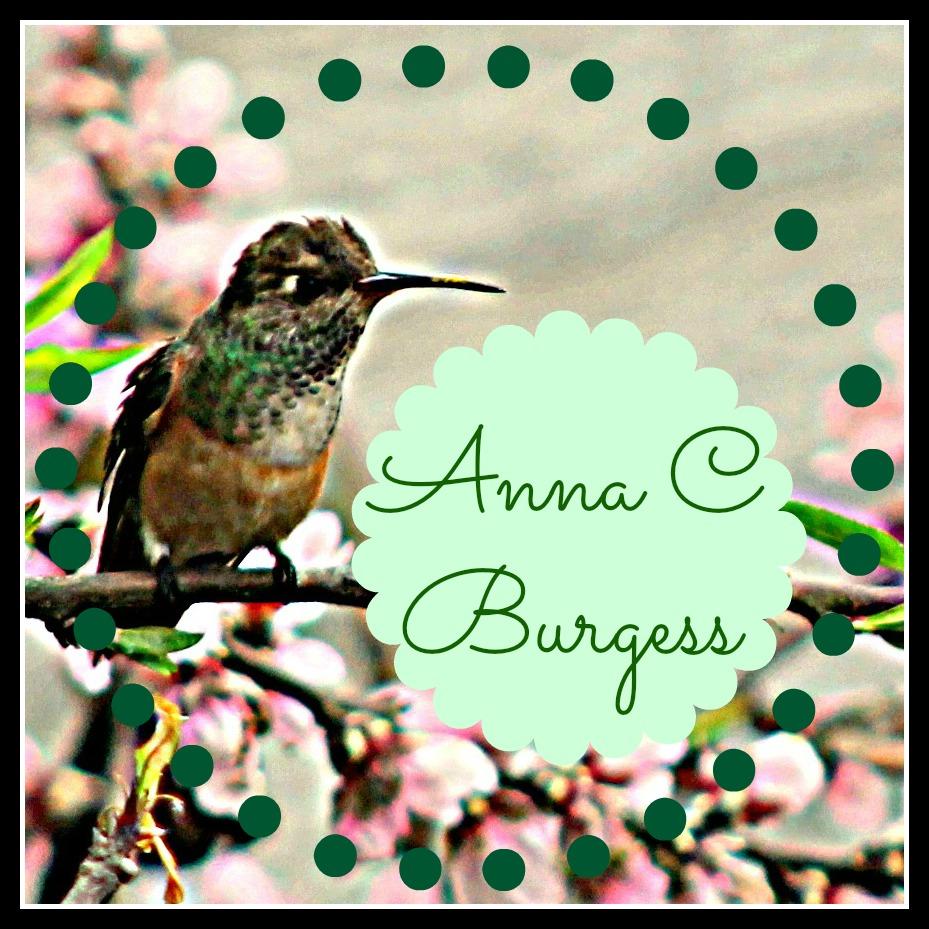 hummingbirdHDRframelogo.jpg