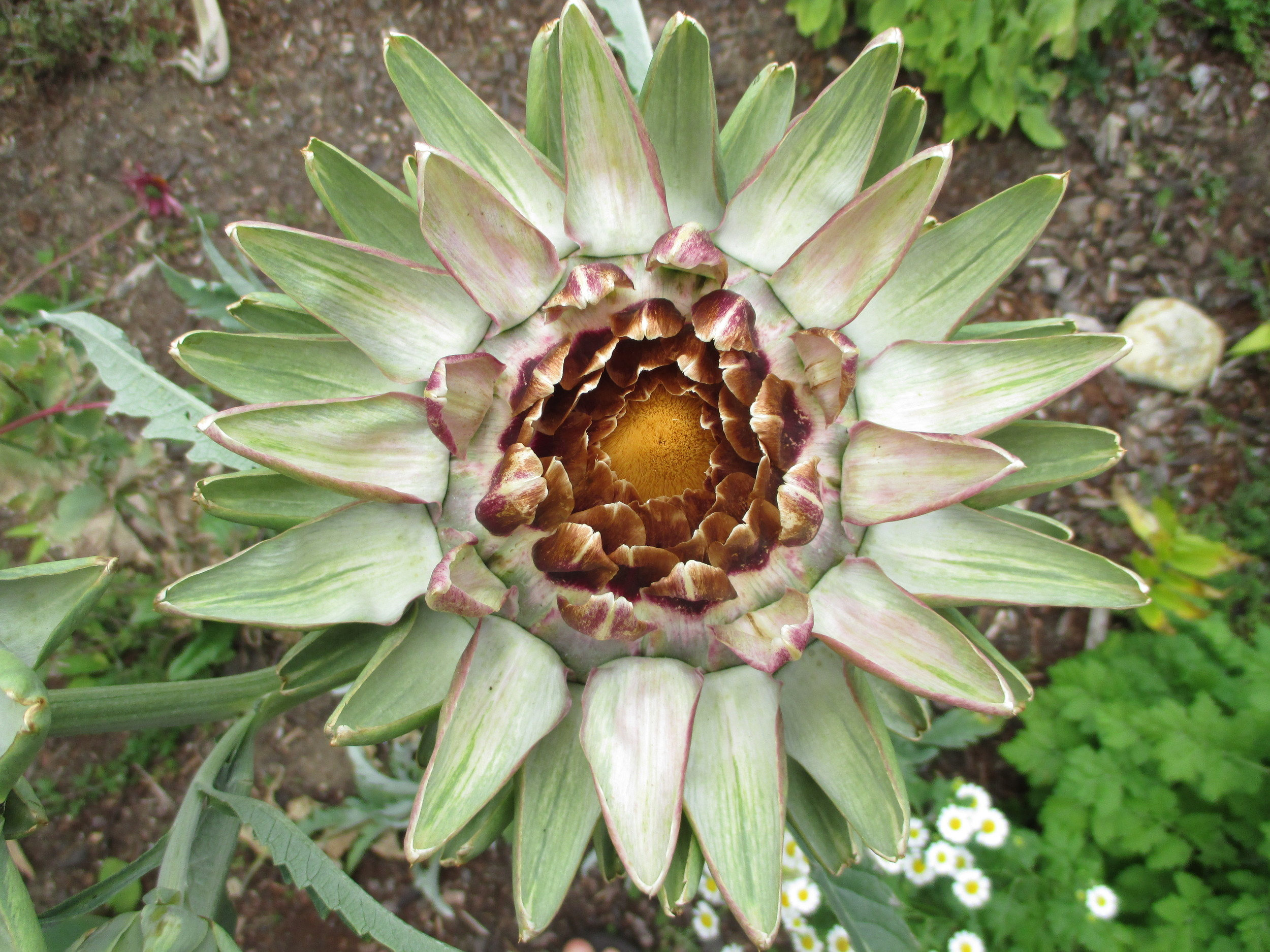 And yet another artichoke.