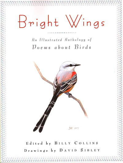 bright-wings-cover (1).jpg