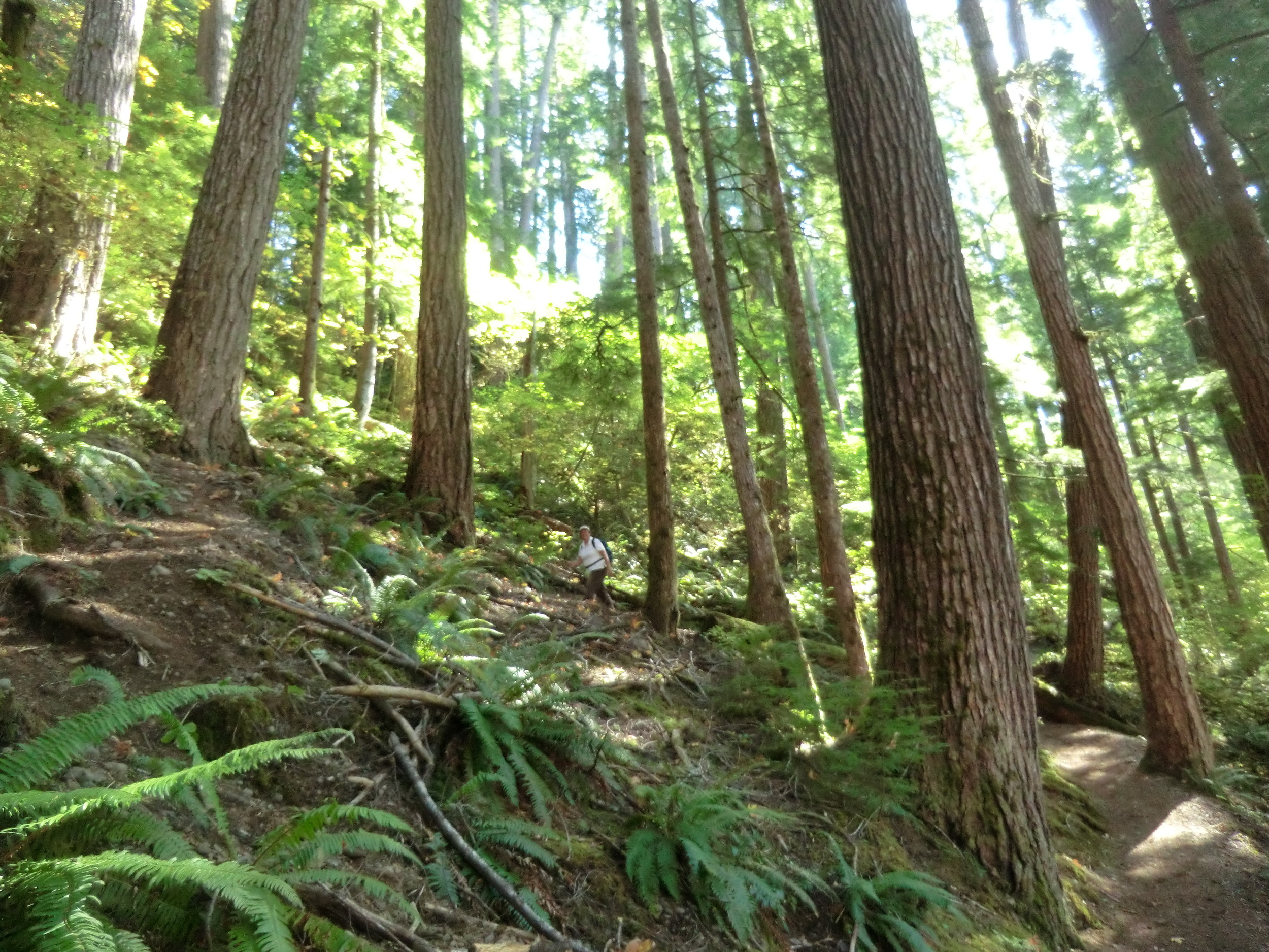 "Are these the ""last acres"" of the old-growth forests for marbled murrelets? If not...where are they?     Photo by MM Ruth."