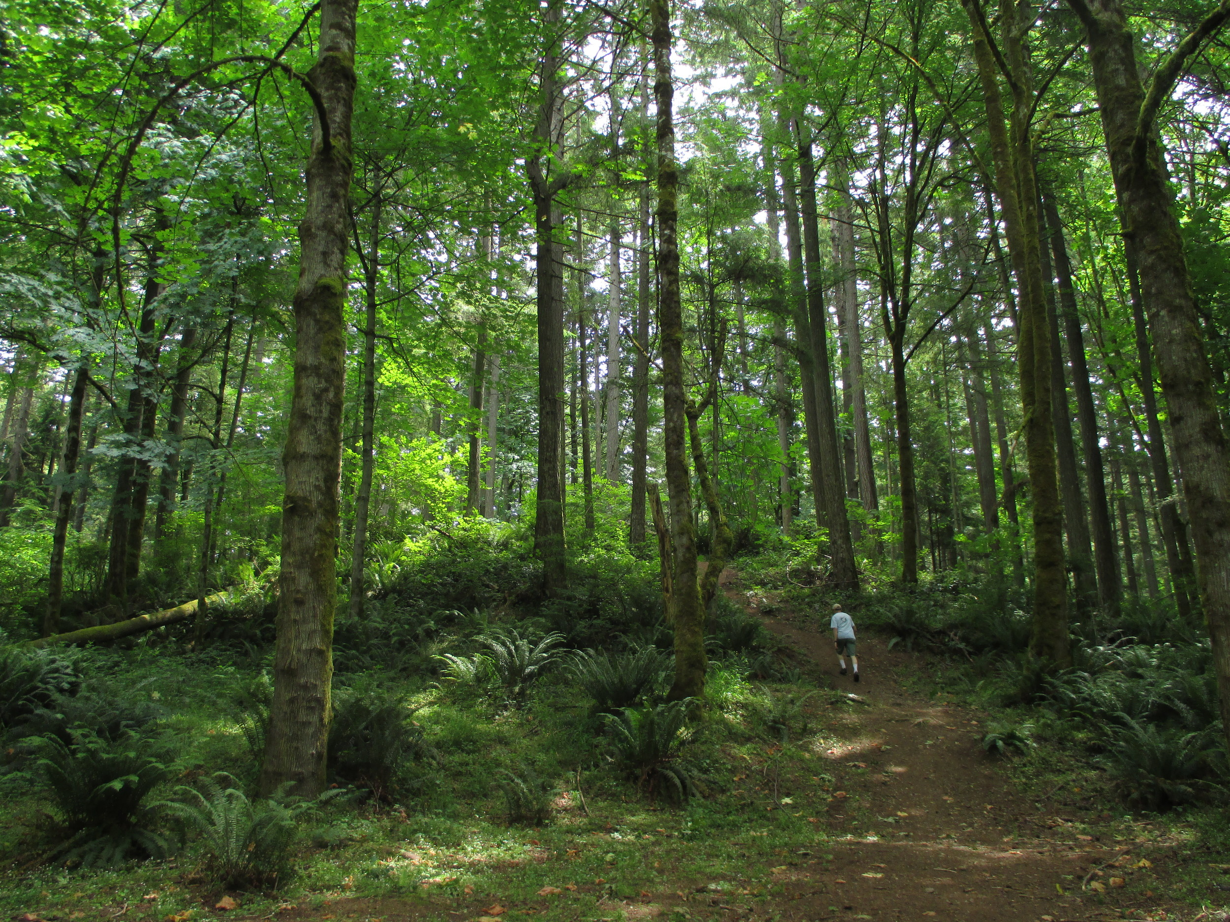 The LBA Woods in Olympia, Washington. What could be saved by the 2% tax city residents voted to establish to help fun the acquisition of 500 acres of wildlife habitat and future parkland.