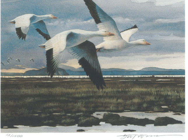 This is the artwork used for the 1993 Washington Duck stamp by artist Fred Thomas. Nice snow geese, but look at those lovely, moody, brooding stratocumulus clouds!