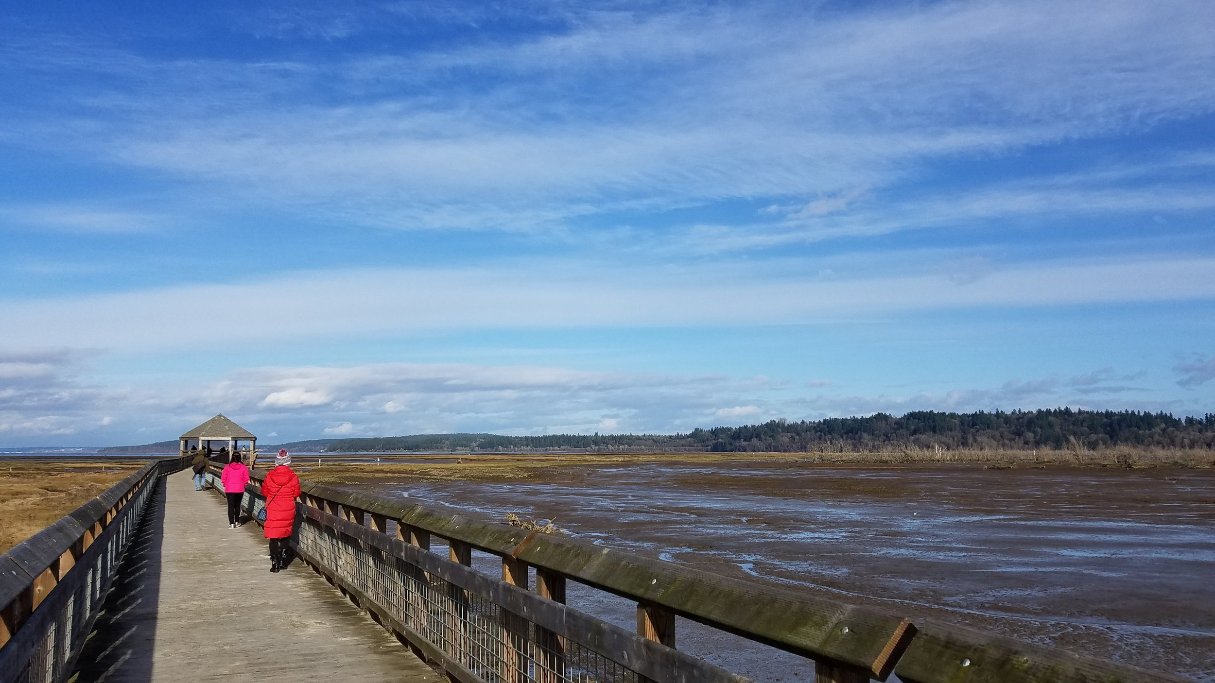 Billy Frank Jr. Nisqually National Wildlife Refuge, to the northeast of Olympia,is one of the best cloud-viewing places in the South Sound. The boardwalk gives you the feeling you're walking into the sky.