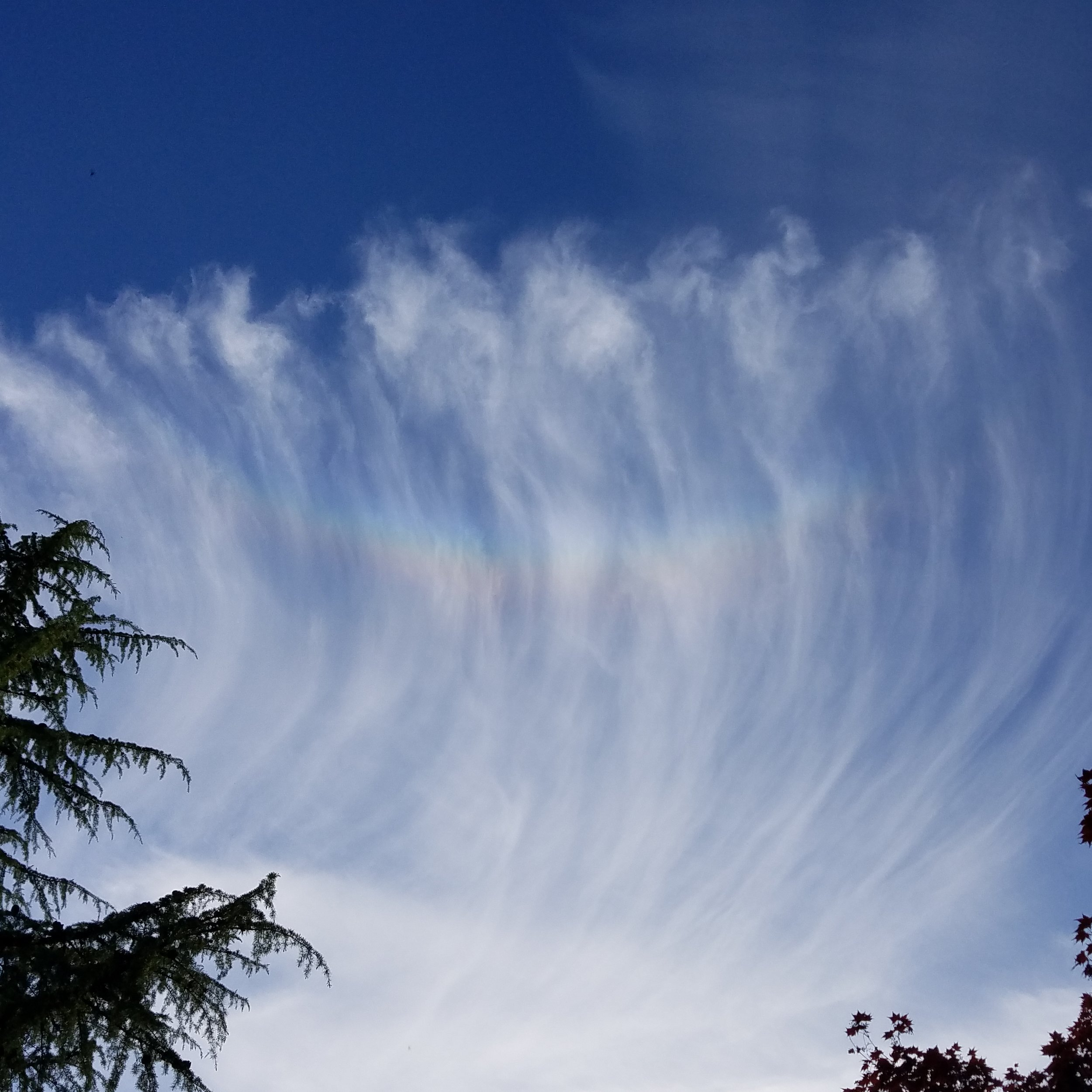 """Just as I was about to bury my head in a book, these Cirrus uncinus clouds (high, icy clouds with hooks and long streamers) appeared with an optical phenomenon known as a cirumzenithal arc.This """"smiling rainbow"""" appears almost directly overhead (hence, """"zenith"""")when the sunlight strikes the plate-like ice crystals in the cloud when the crystal face is parallel to the ground. The sun enters the top face of the ice crystal and exits"""