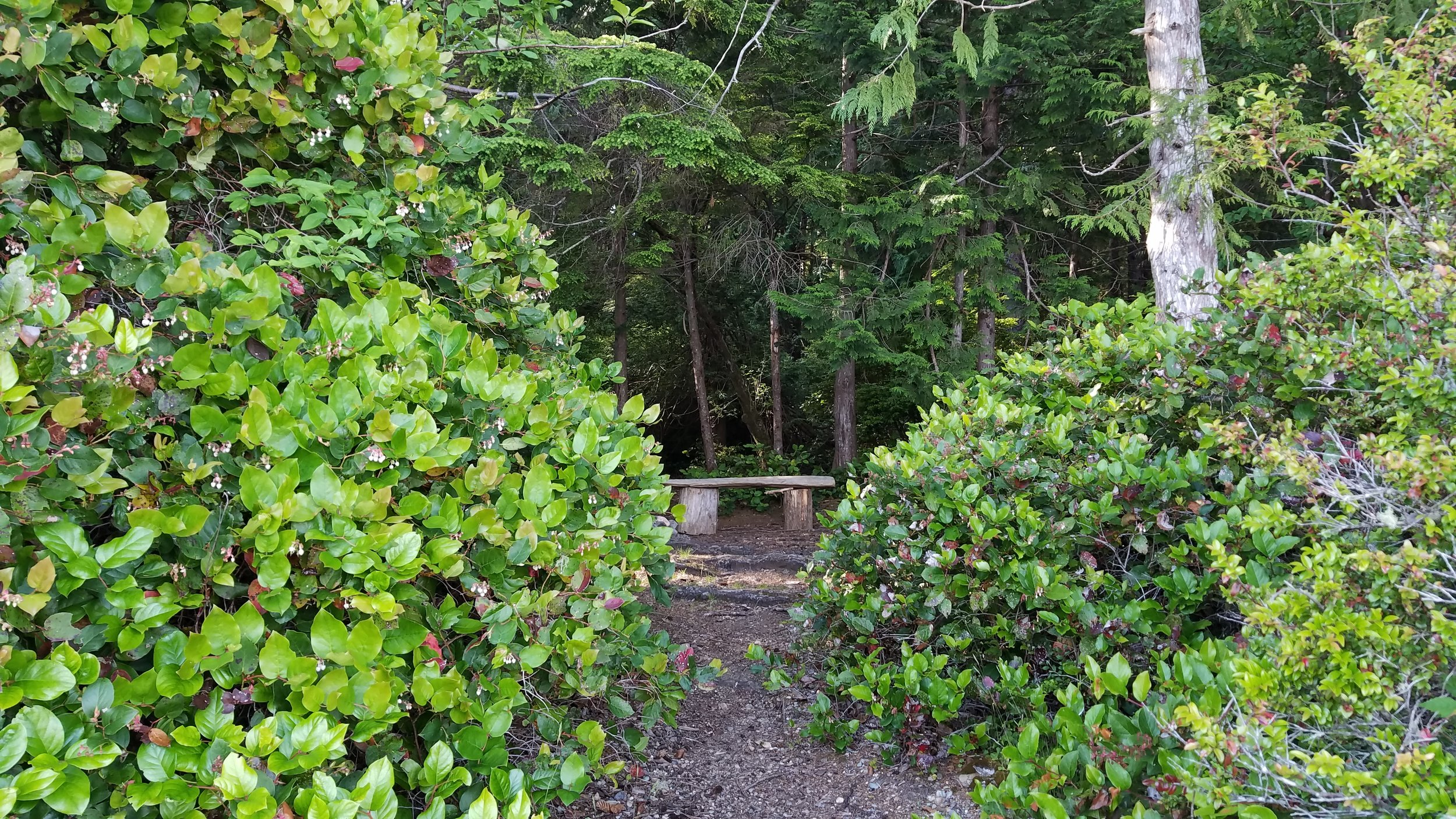 The only sign that you've arrived at the entrance to the primitive campground at Erickson's Bay on Lake Ozette is this alluring driftwood bench. Photo by MM Ruth.