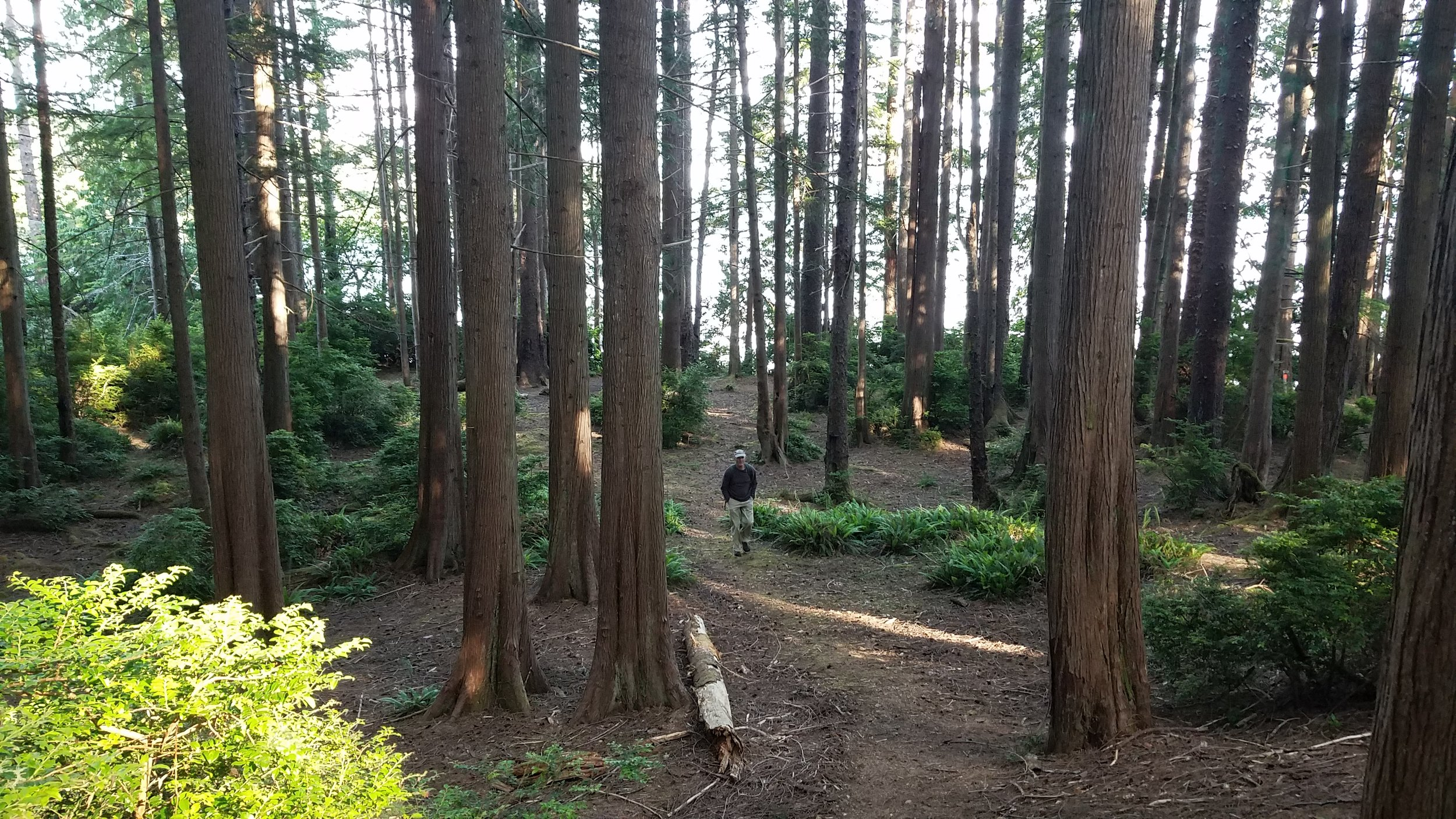 Erickson's Bay campground on Lake Ozette features a very young, tidy forest of western red-cedars, ferns, and huckleberry and looks like a Hollywood set. Photo by MM Ruth.