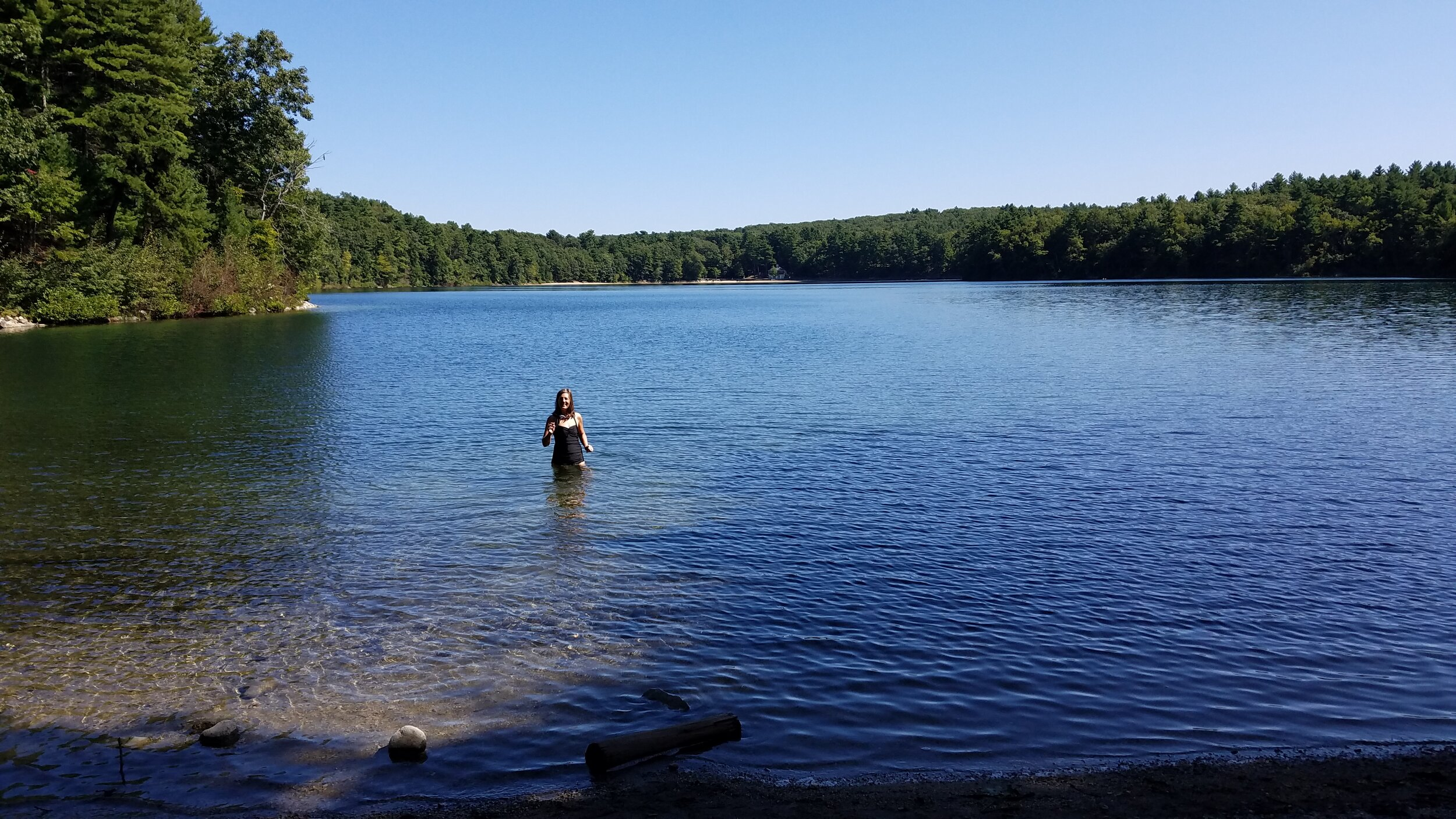 The length of Walden Pond from Long Cove—a lovely entry point for a Wild Swim. (Photo by M.D. Ruth)