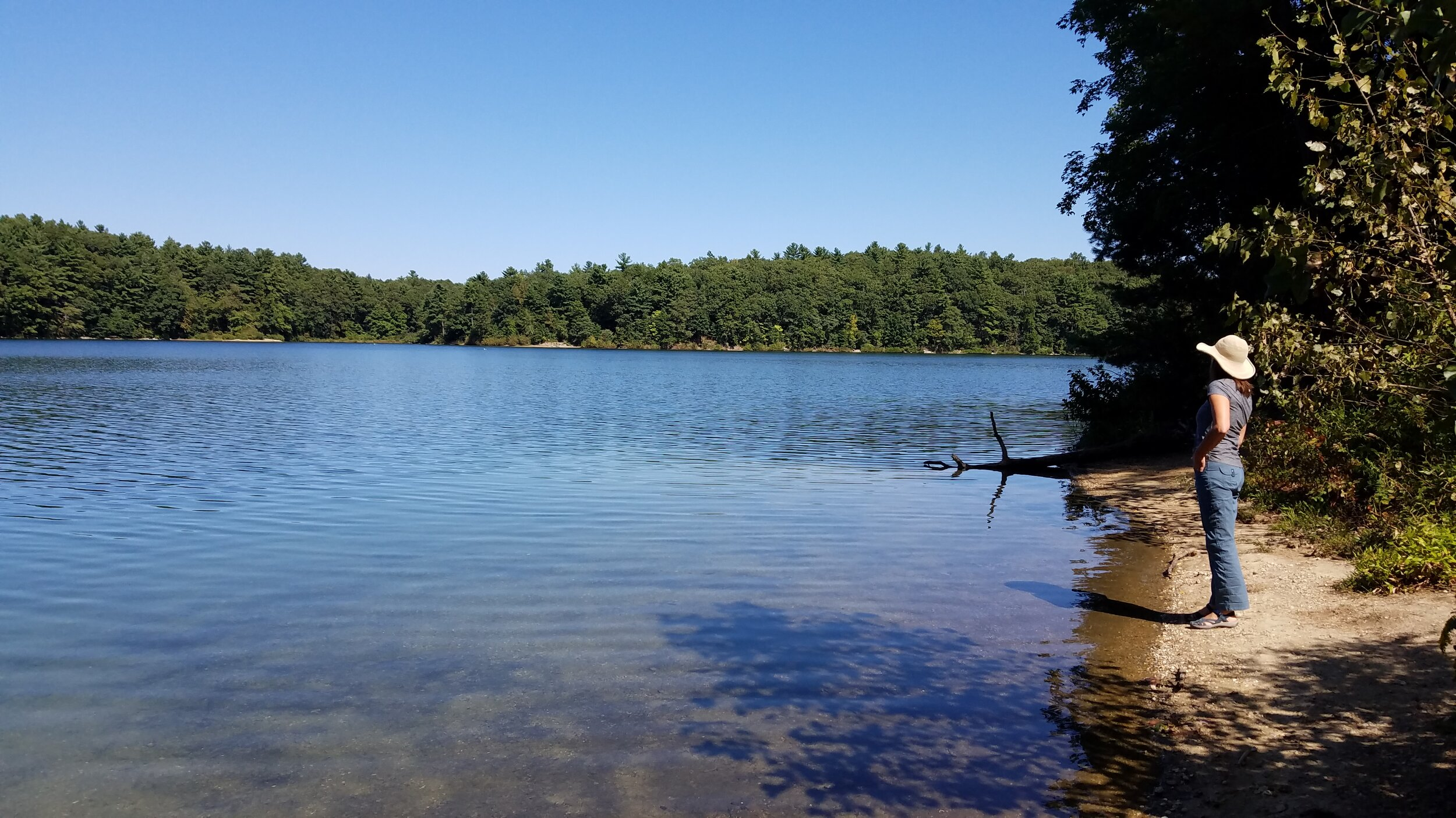 Thoreau's Walden Pond beckons wild swimmers from near and far. Swimming here is like swimming in a shrine. (Photo M.D. Ruth)