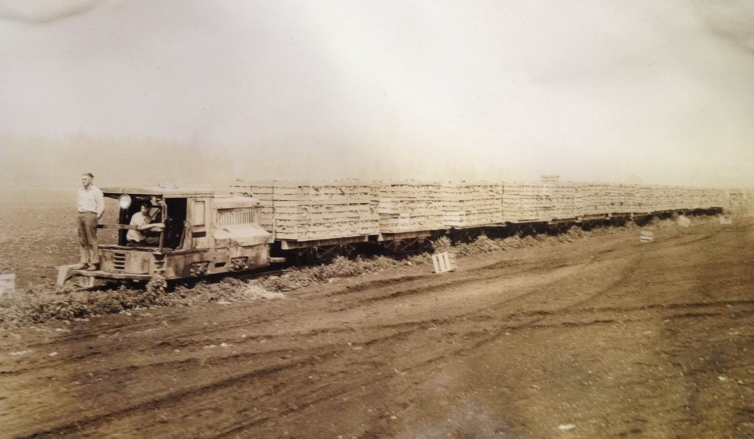 A lettuce farm train en route to a packing shed.