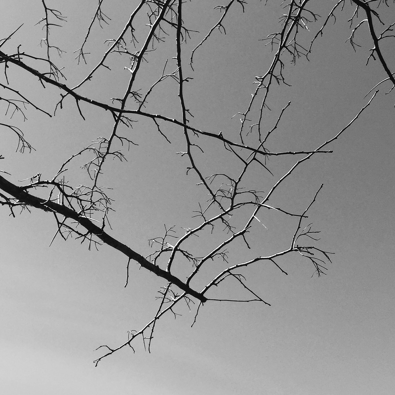 01_Twigs.jpg