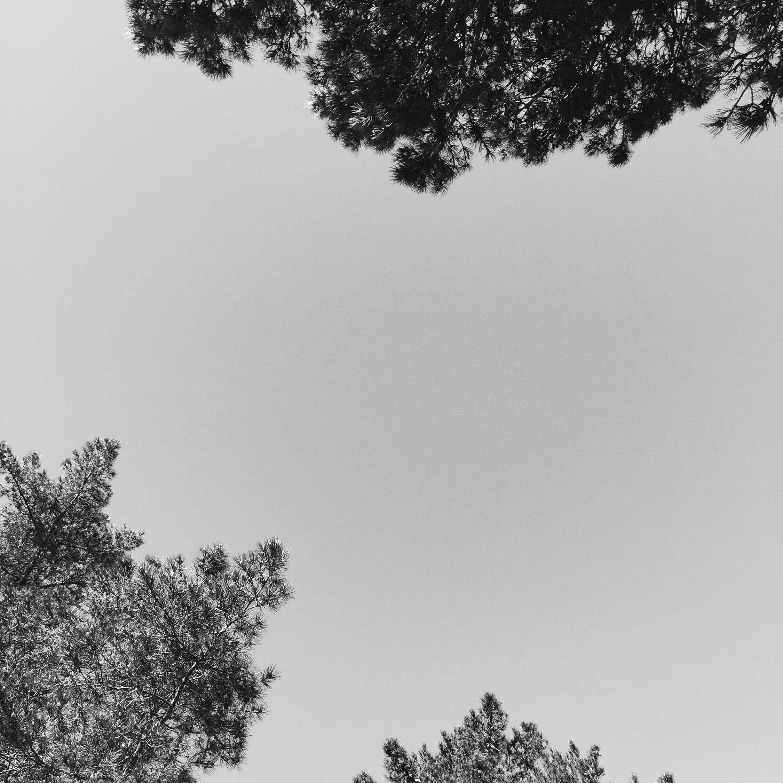 02_Clarity.jpg