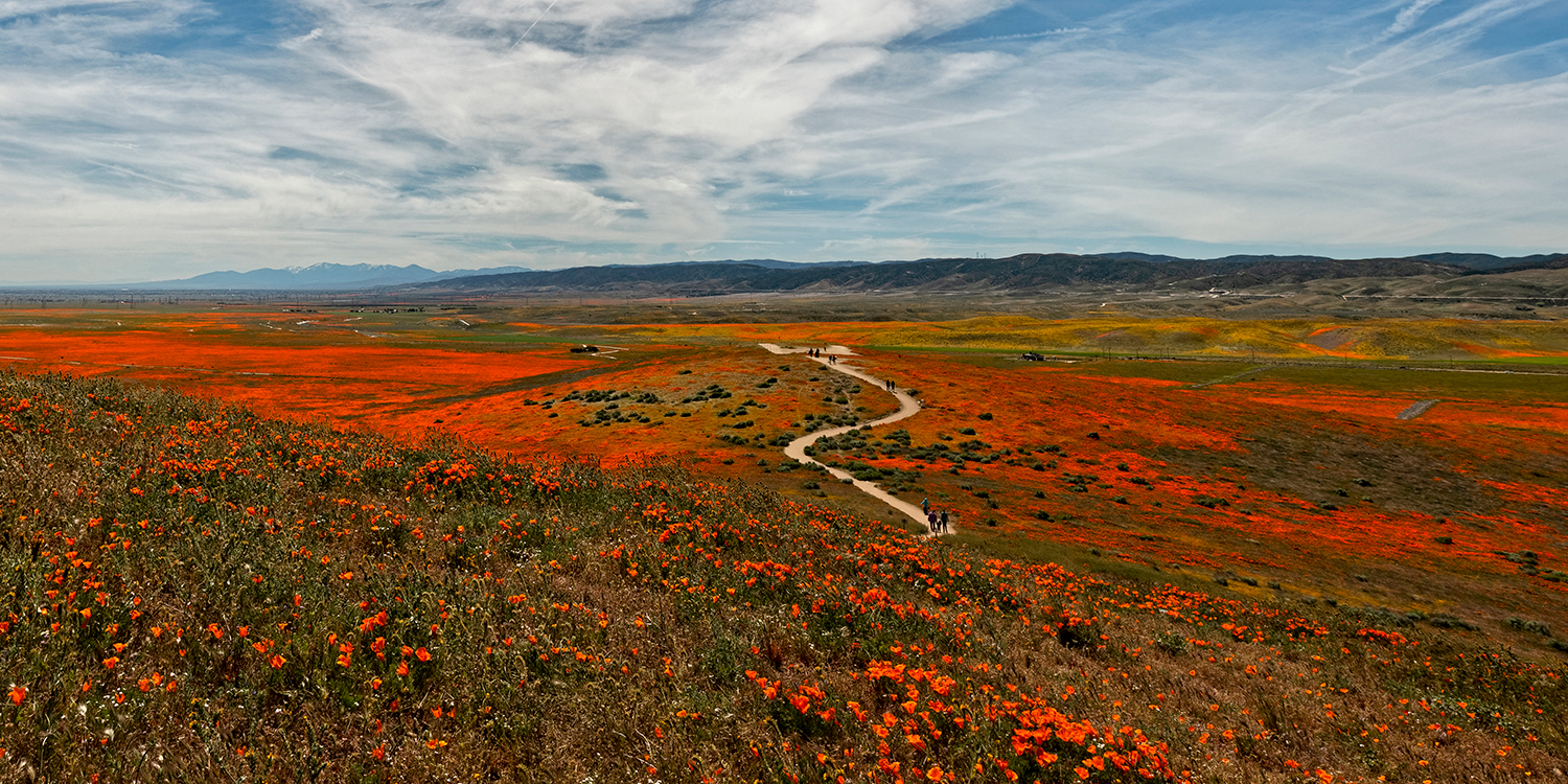 Super Bloom 24x12 Selection B. On this image I cropped a larger photo size to bring the image closer but still give you the 24 wide by 12 inch height. The people on the trail are larger.