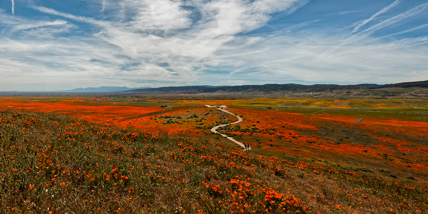 Super Bloom crop for a smaller 20 width by 10 inch high image.