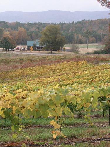 White Oaks Winery
