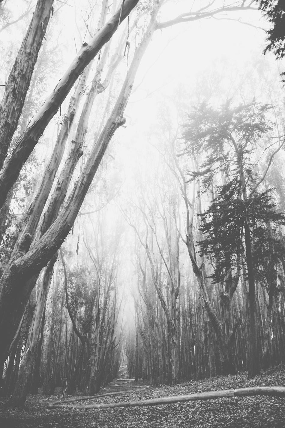 Foggy Presidio by Paige Jones