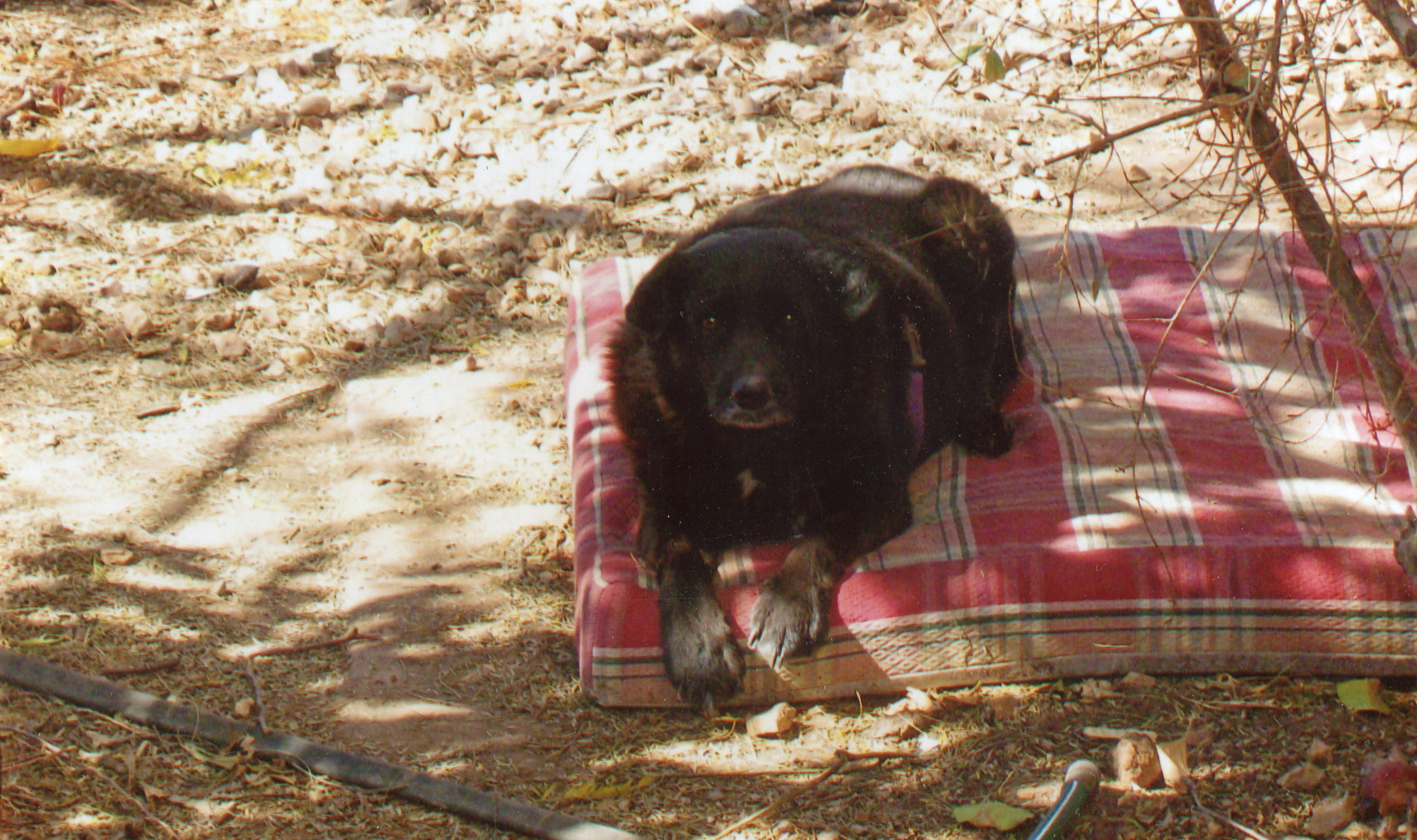 zoot, at christopher creek, 2009